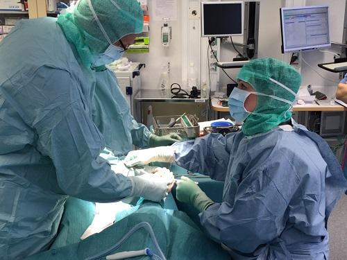 Titti har, och man har vid tillfälle alltid följt regelboken, fått möjlighet att vara med på operationer.