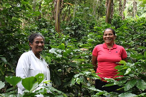 Både Antonieta och Victoria har nu en egen kaffeodling som ger dem en ekonomisk trygghet. Foto: Liinu Diaz Rämö.