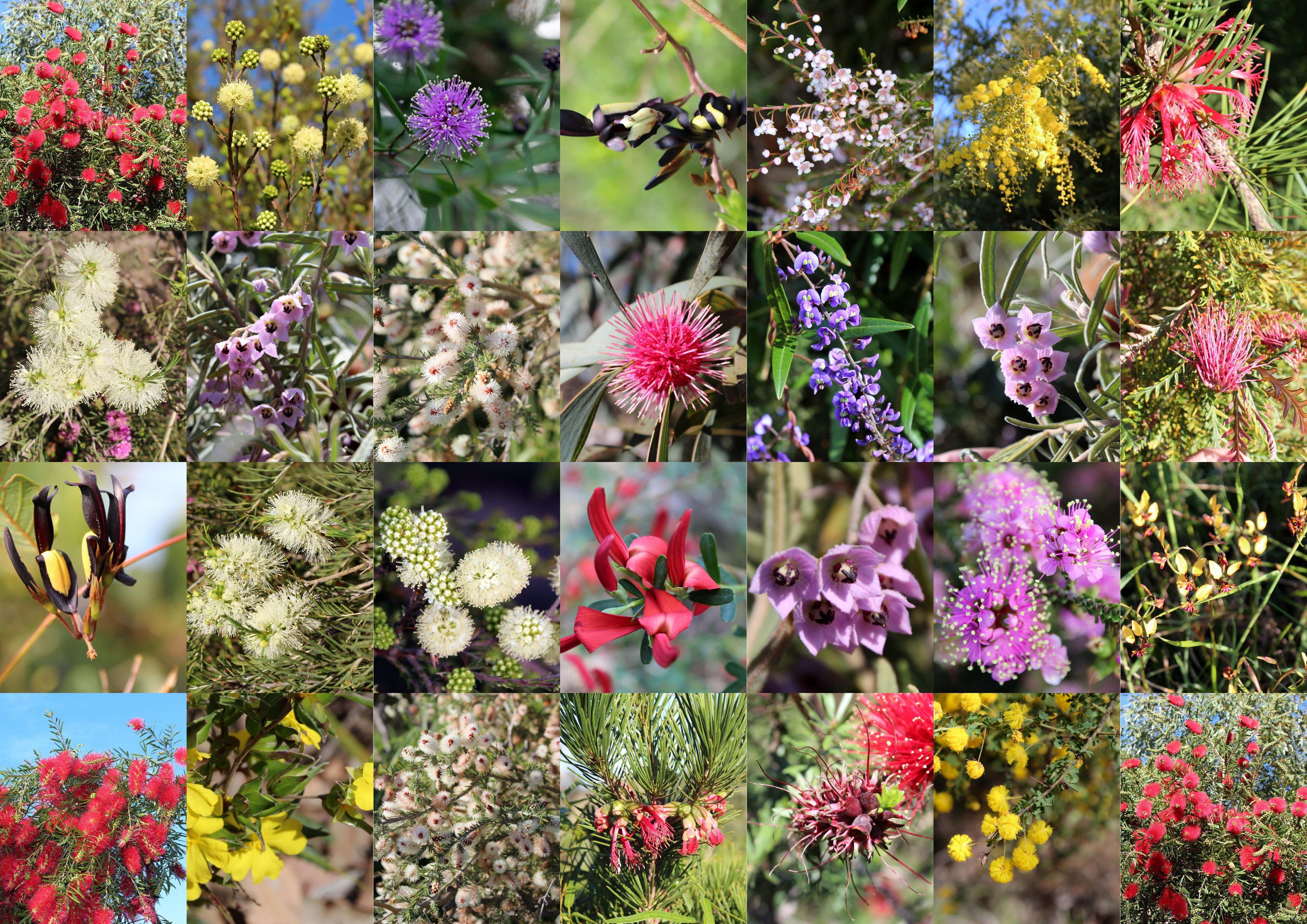 Till skillnad från andra allergener, som damm och pälsdjur, är det svårt att undvika pollen då det under pollensäsongen finns i luften överallt.