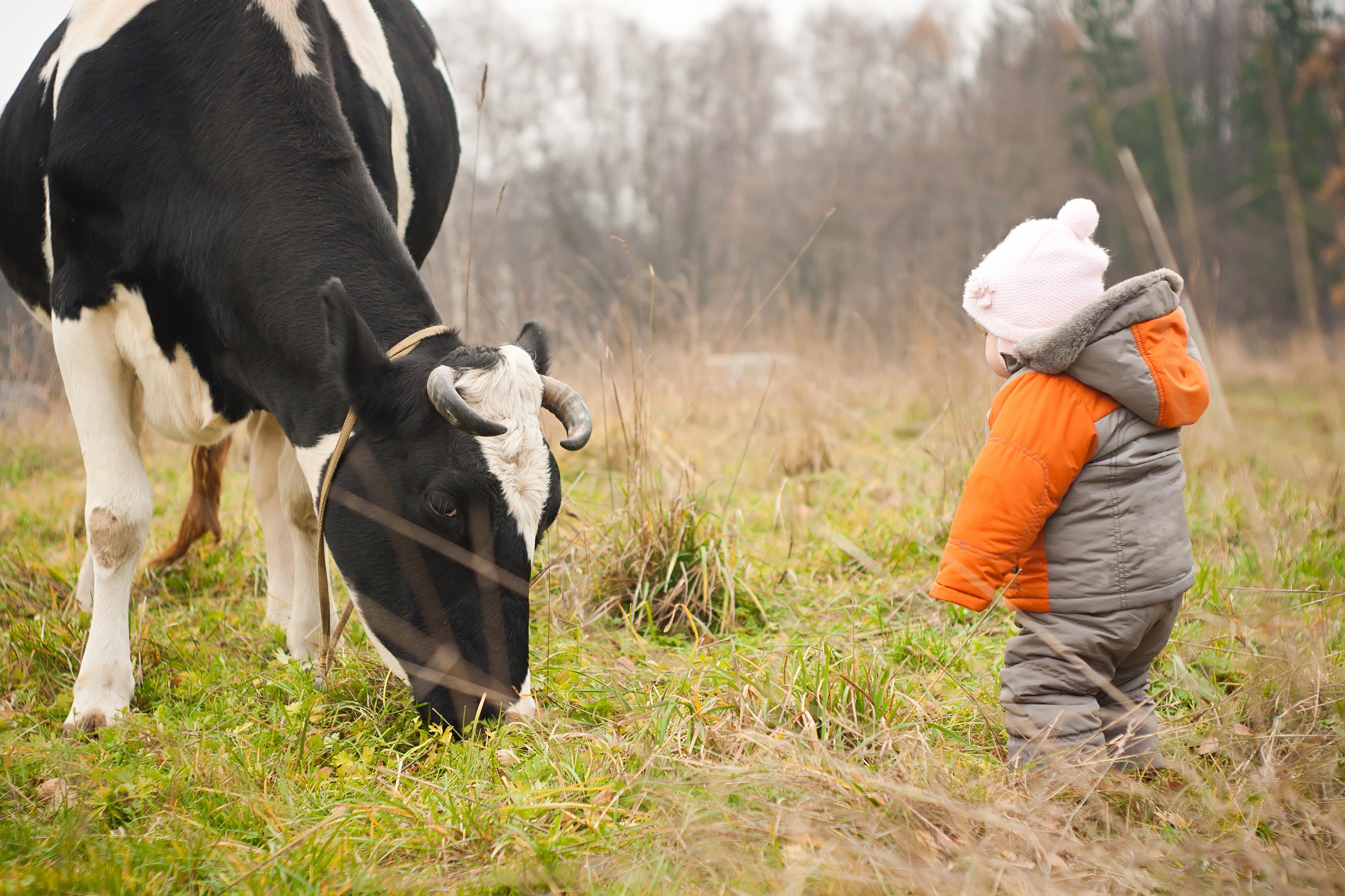 Att korna får gå ute och beta tror forskarna bidrar till att öka andelen omega-3 i mjölken.