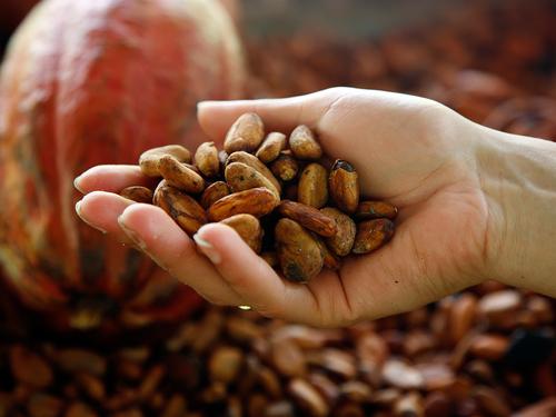 Flavanoler finns förutom i kakaobönor även i teblad och i vissa frukter och grönsaker.
