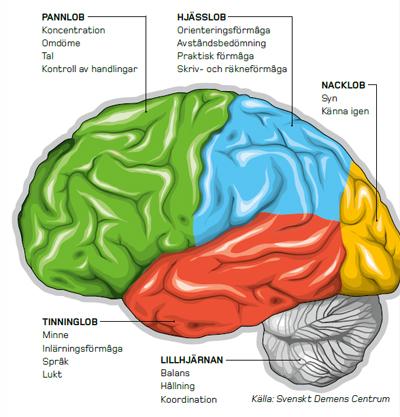 höger och vänster hjärnhalva uppgifter