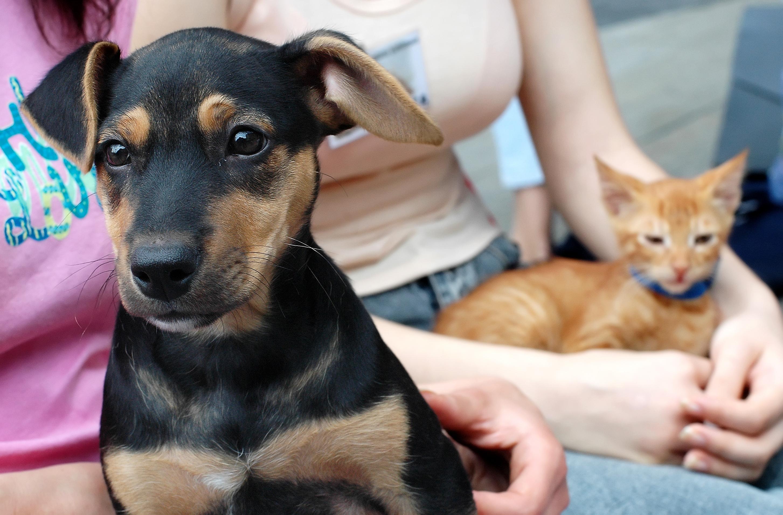 Allergi mot hund är en av de vanligaste pälsdjursallergierna.