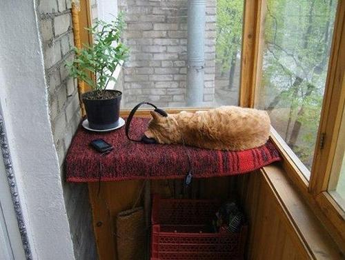 Specialkomponerad musik kan stimulera katten när den är ensam hemma.