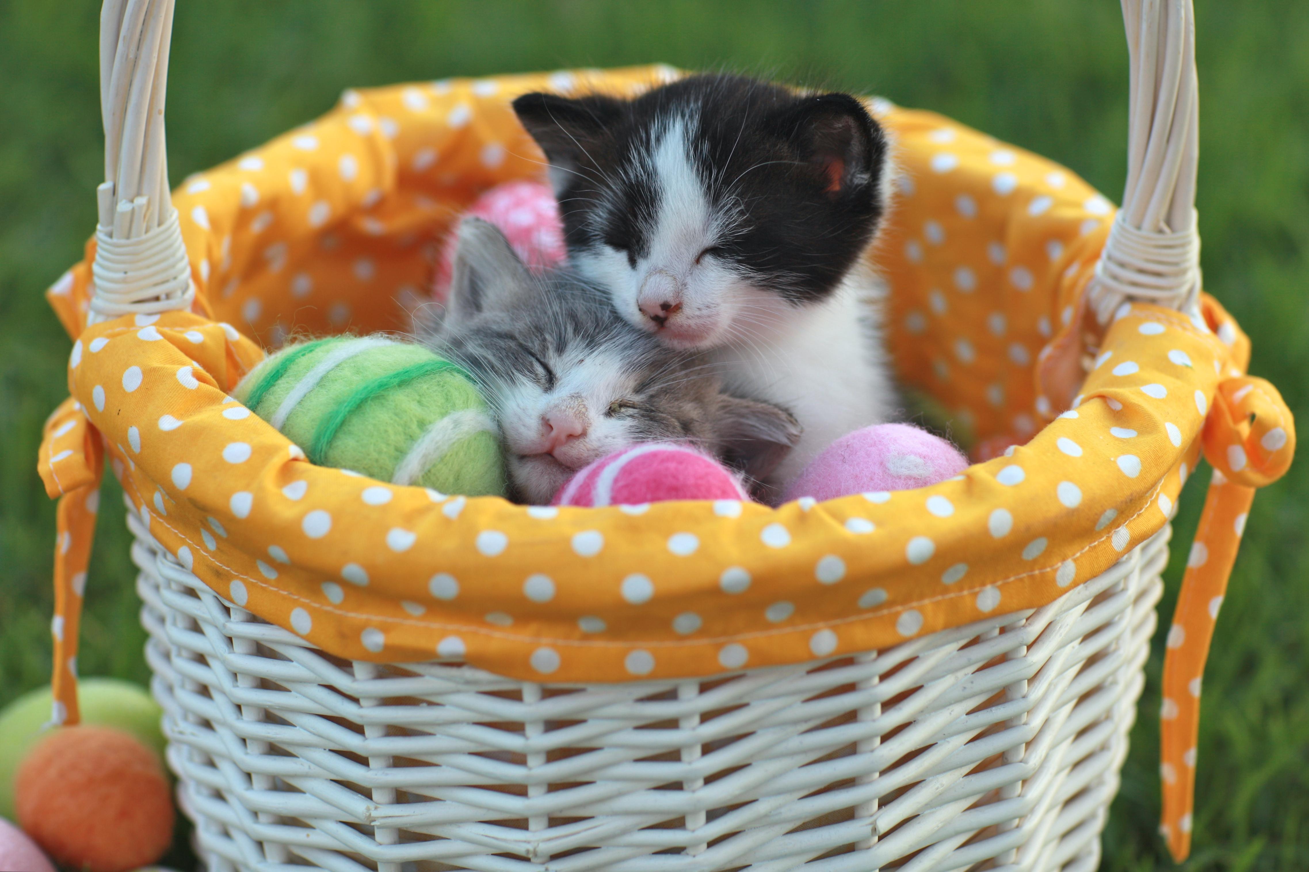 Med rätt kunskap kan du undvika påskens faror och du och din katt kan få en härlig påsk tillsammans.
