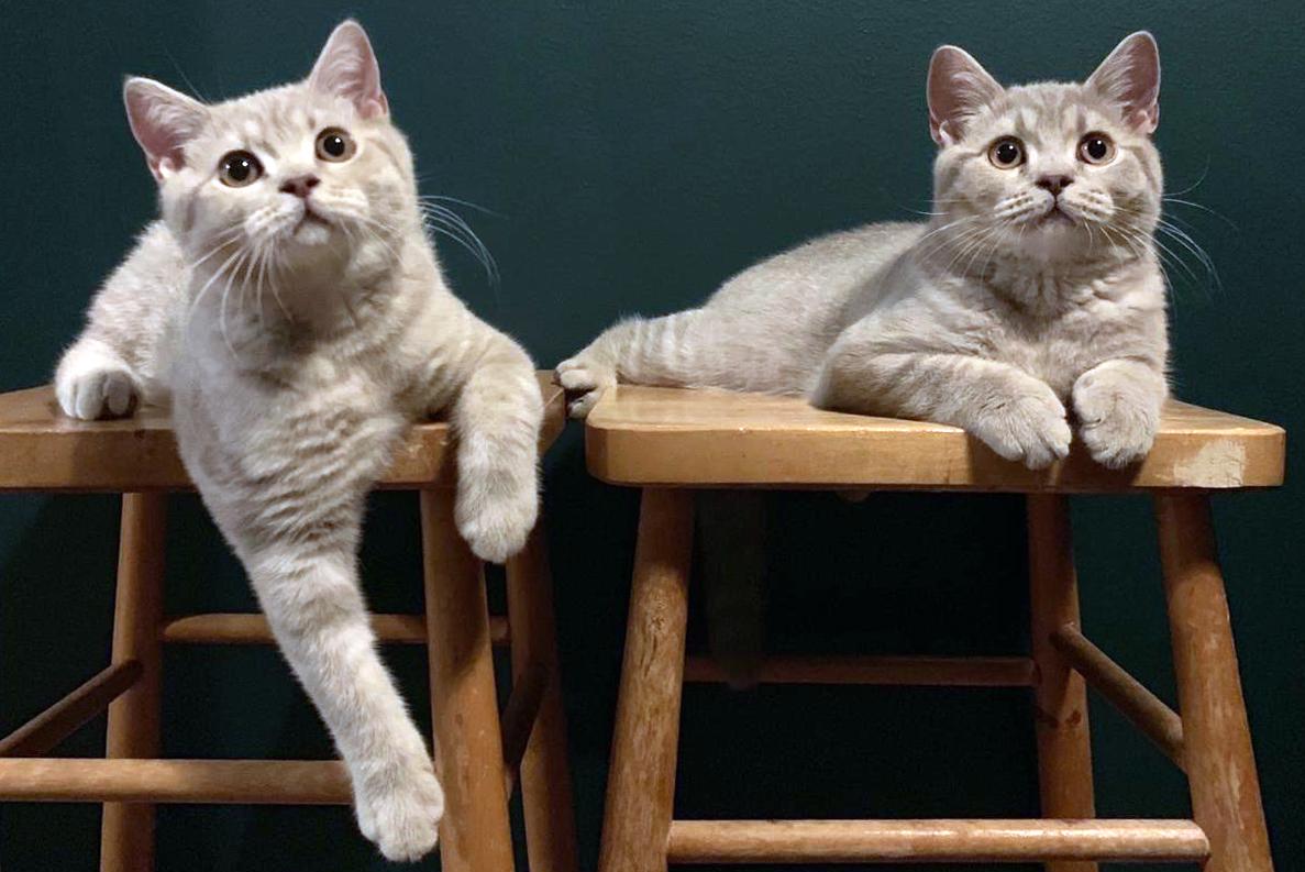 Tonläget kan vara avgörande för hur din katt uppfattar det du säger.