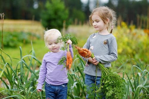 Medelhavskost, som kan förebygga övervikt hos barn, baserad på nordiska livsmedel kan bland annat innefatta grönsaker och rotfrukter.