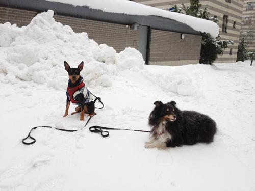Använd sunt förnuft och utgå från dig själv när du ska ut och promenera och göra bus med din hund i vinter.