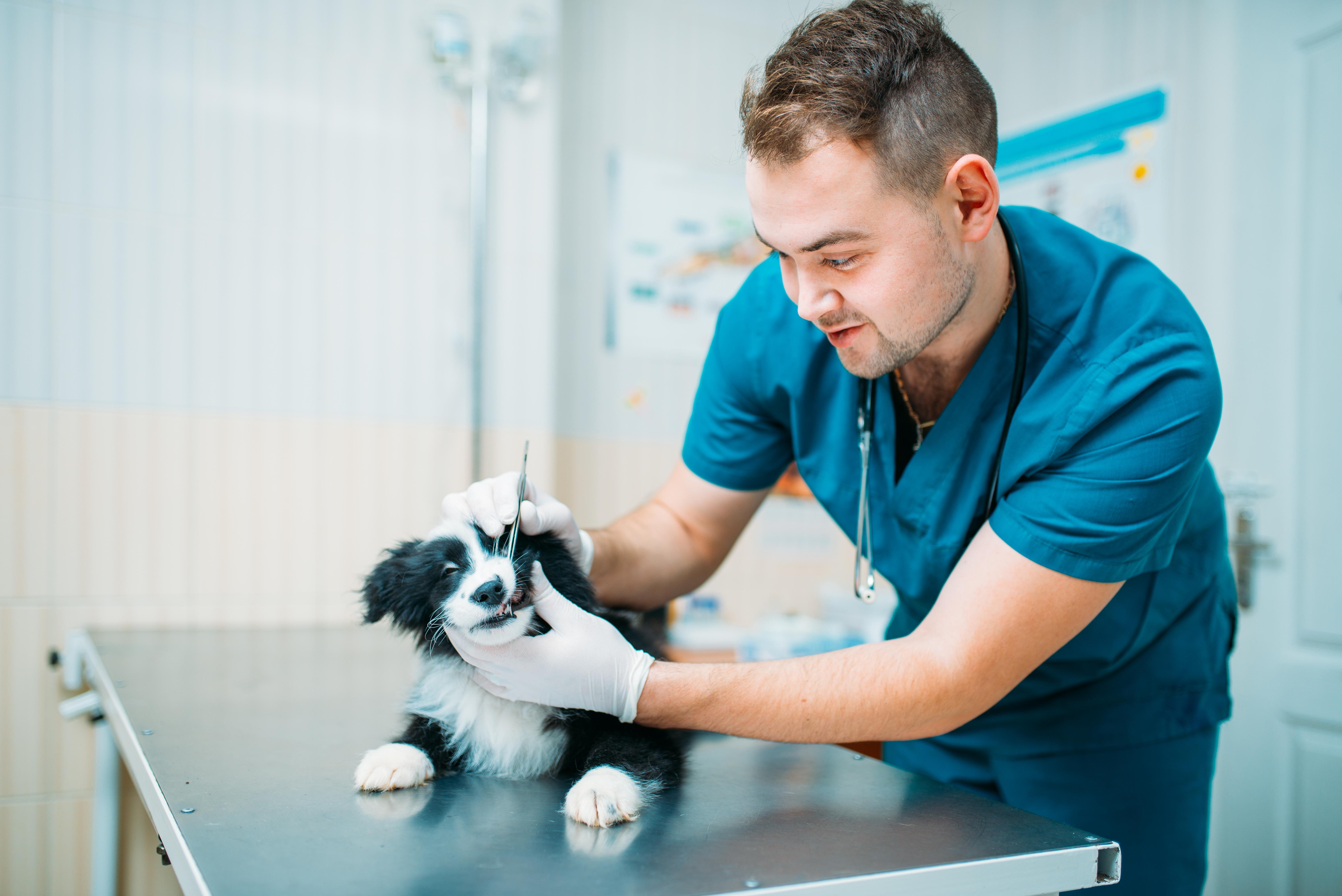 Den nya djurskyddslagen ställer krav på att den som arbetar med djur ska ha tillräcklig kompetens för att tillgodose djurets behov.