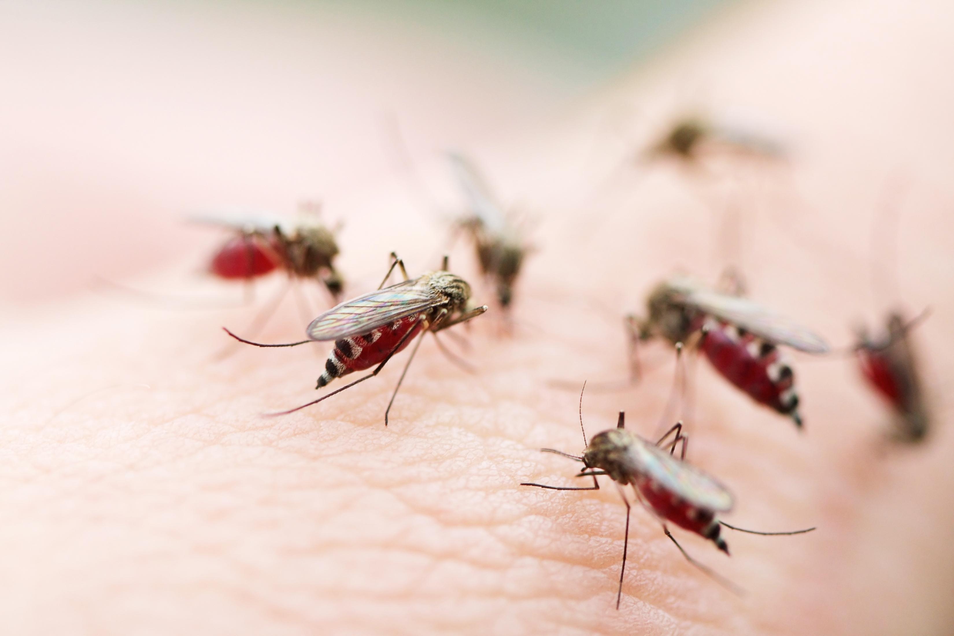 allergimedicin mot myggbett