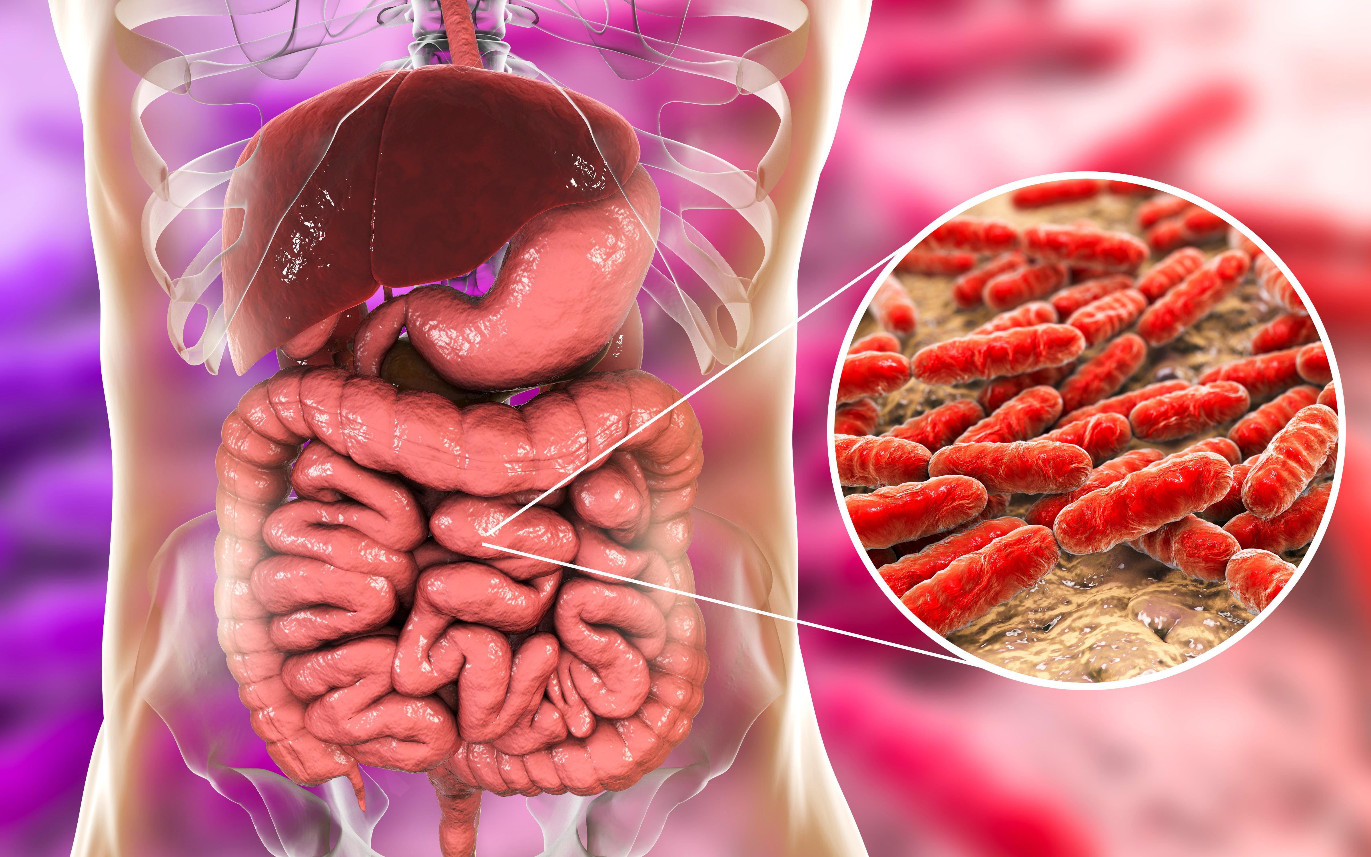 Vi har mängder av bakterier i tarmarna och de flesta är viktiga för att vi ska må bra.