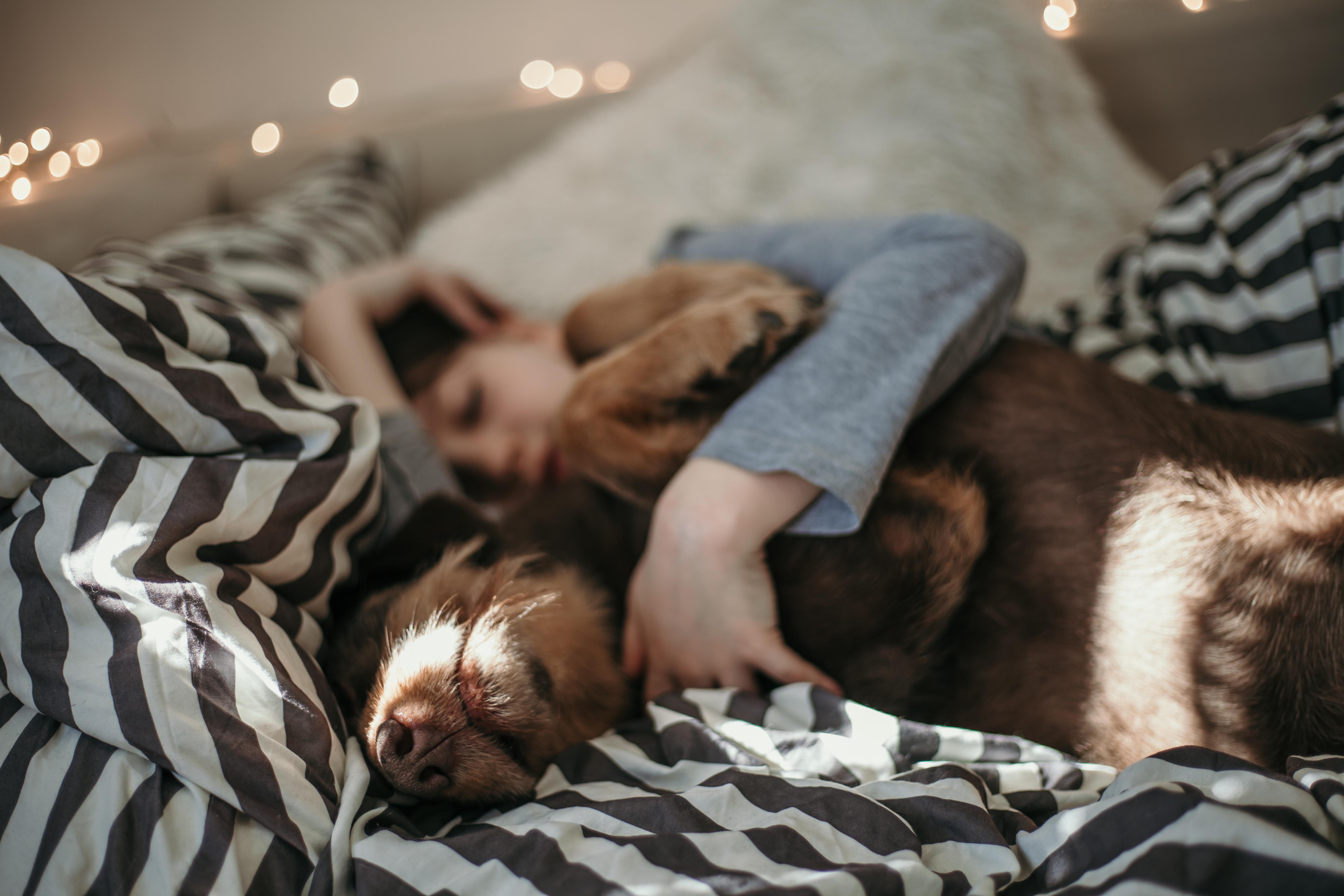 Av de tillfrågade uppgav mer än hälften, 55 procent av kvinnorna, att de delade säng med minst en hund.
