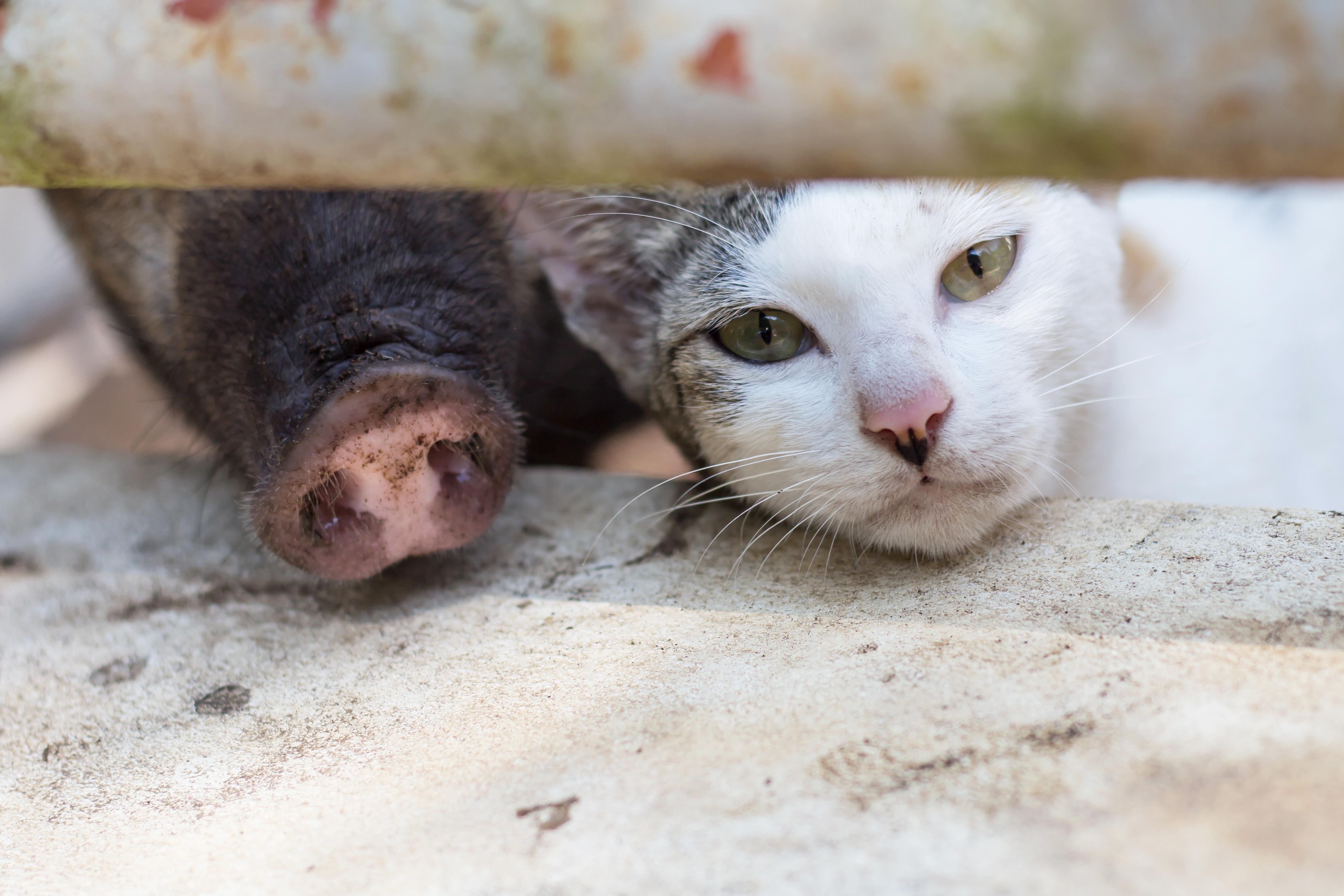 Försäljningen av antibiotika för användning till djur är fortsatt låg i ett internationellt perspektiv.