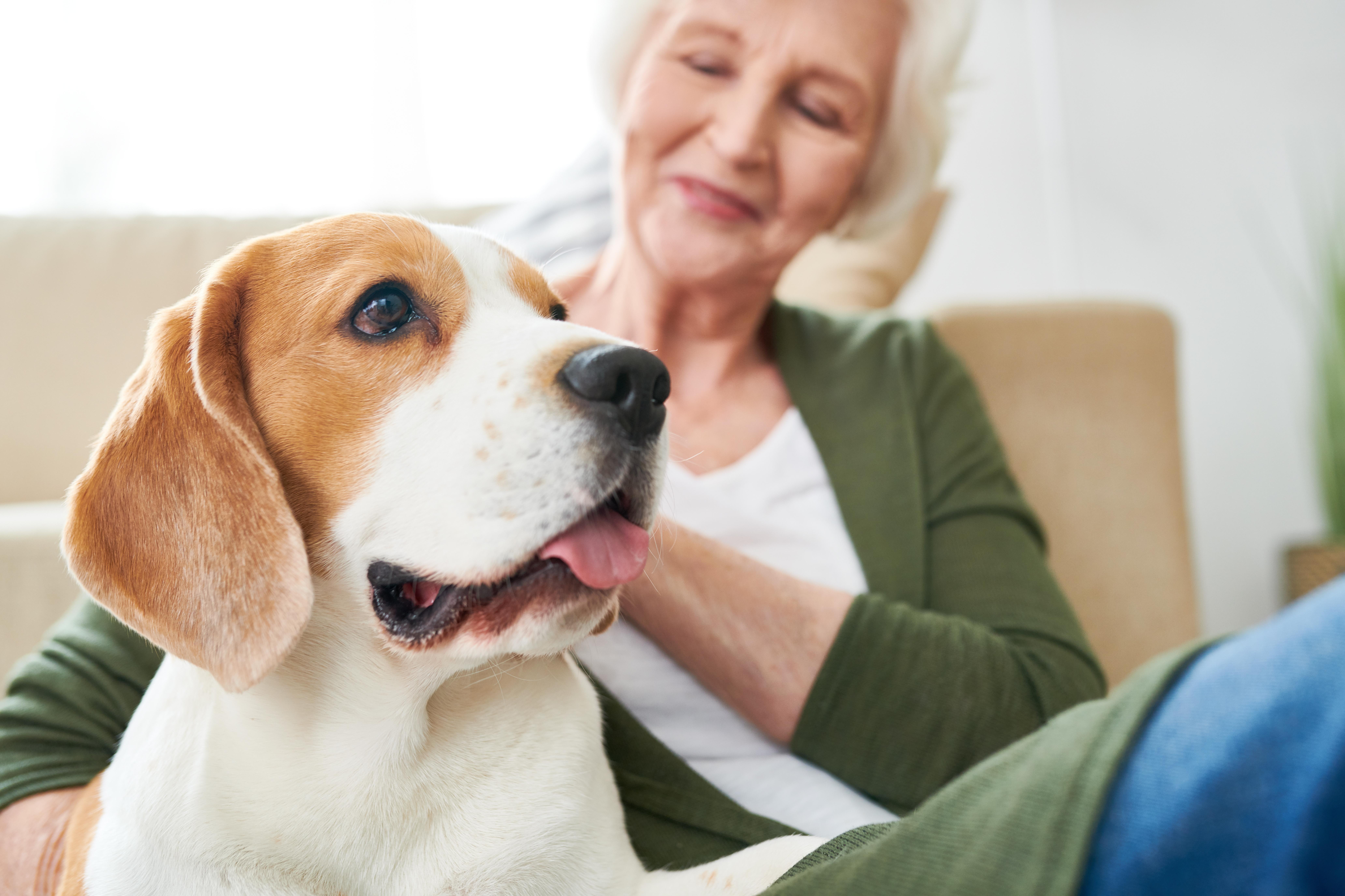 Ensamstående hundägare som haft hjärtinfarkt hade 33 procent lägre risk att dö i efterföljden till sjukdomen.