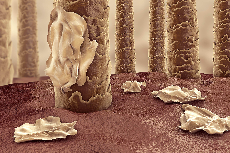 Mjäll är i praktiken döda hudceller som lossnar från din hårbotten. Att döda hudceller avlägsnas från kroppen sker dagligen.