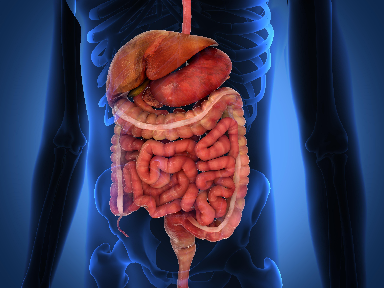Ofarliga hemorrojder och sprickor i ändtarmen kan leda till blod i avföringen.