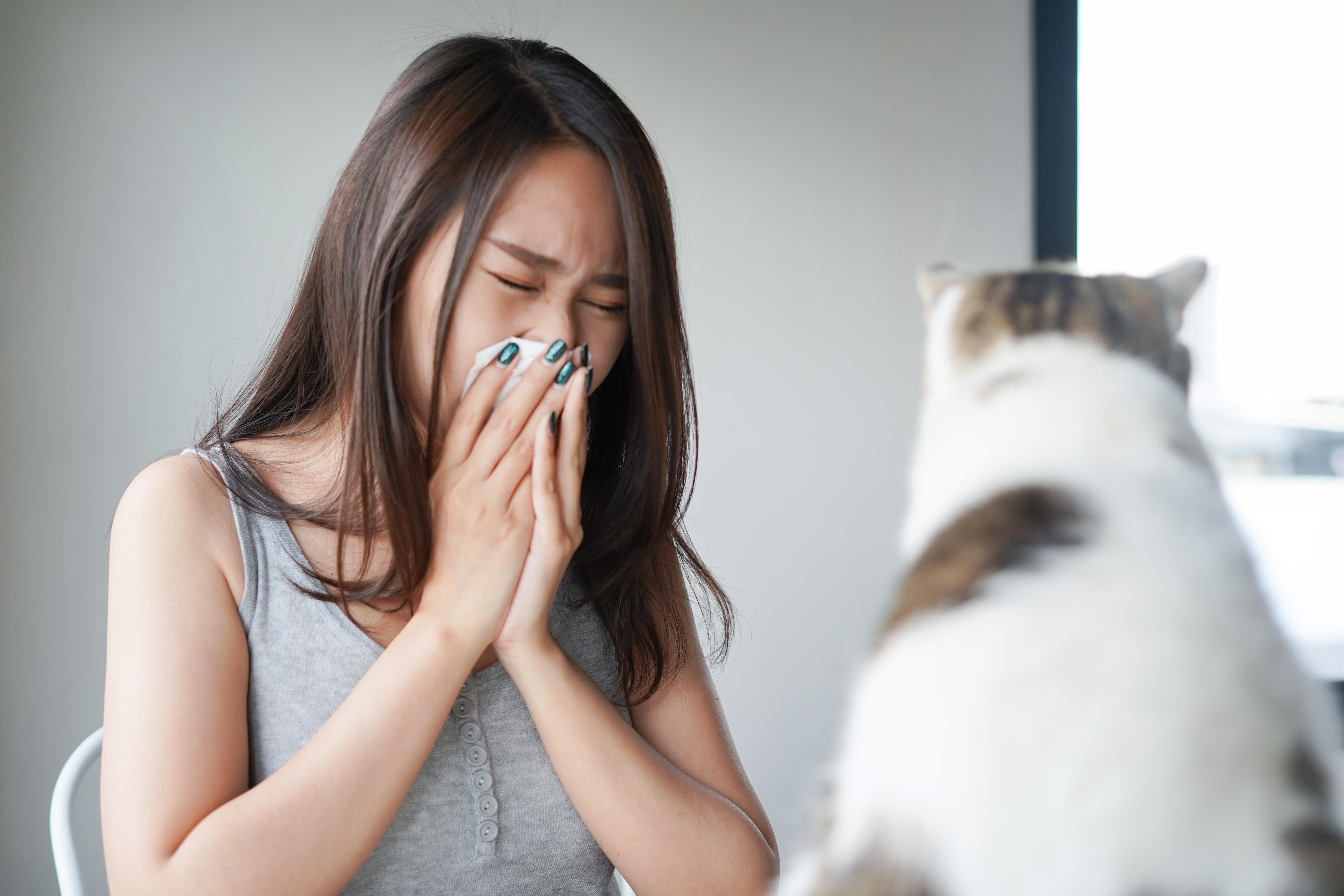 Allergenerna finns framför allt i kattens saliv, urin och talgkörtlar.