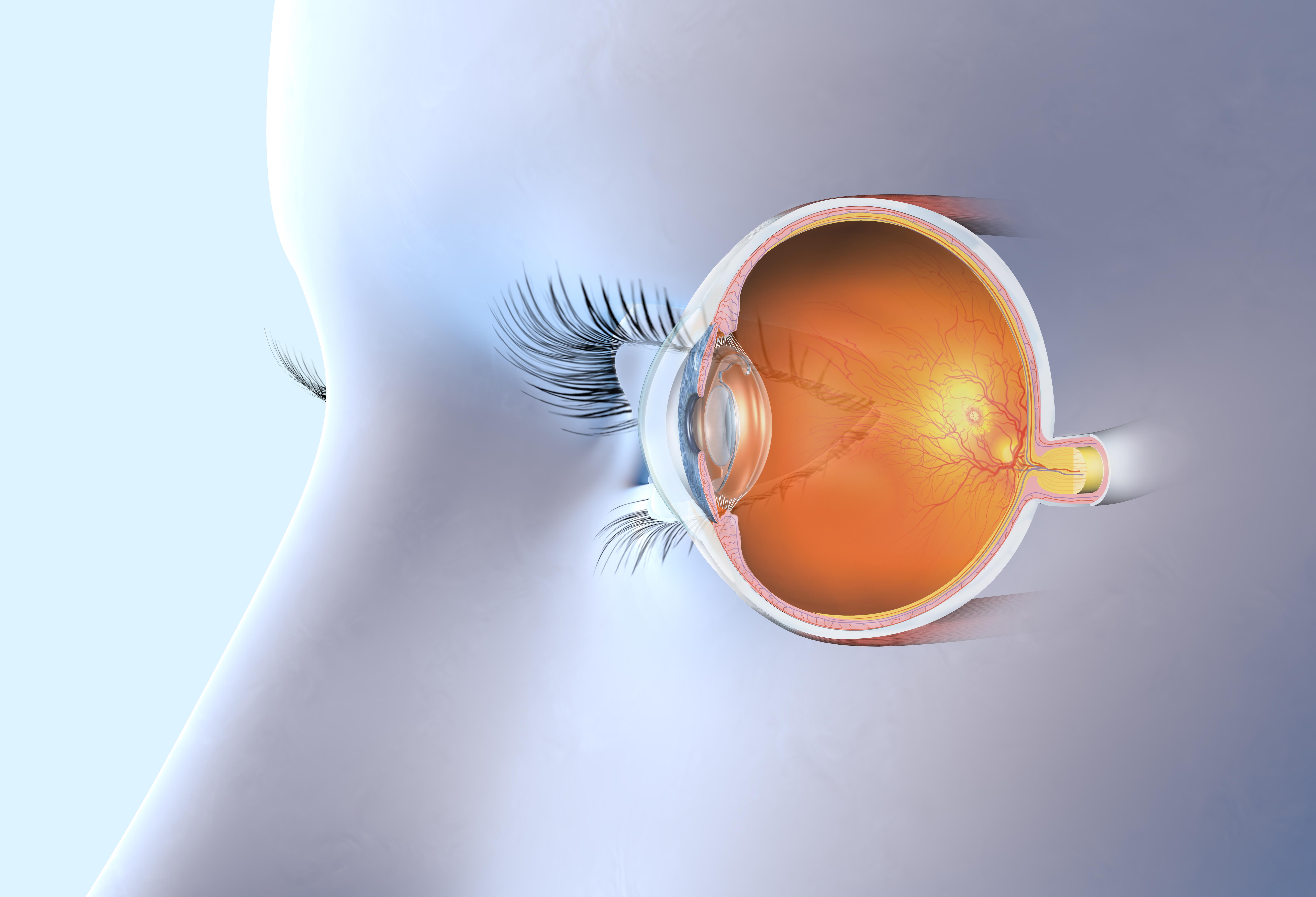 Glaskroppen sitter fast i ögats näthinna och består till ca 98-99 procent av vatten.
