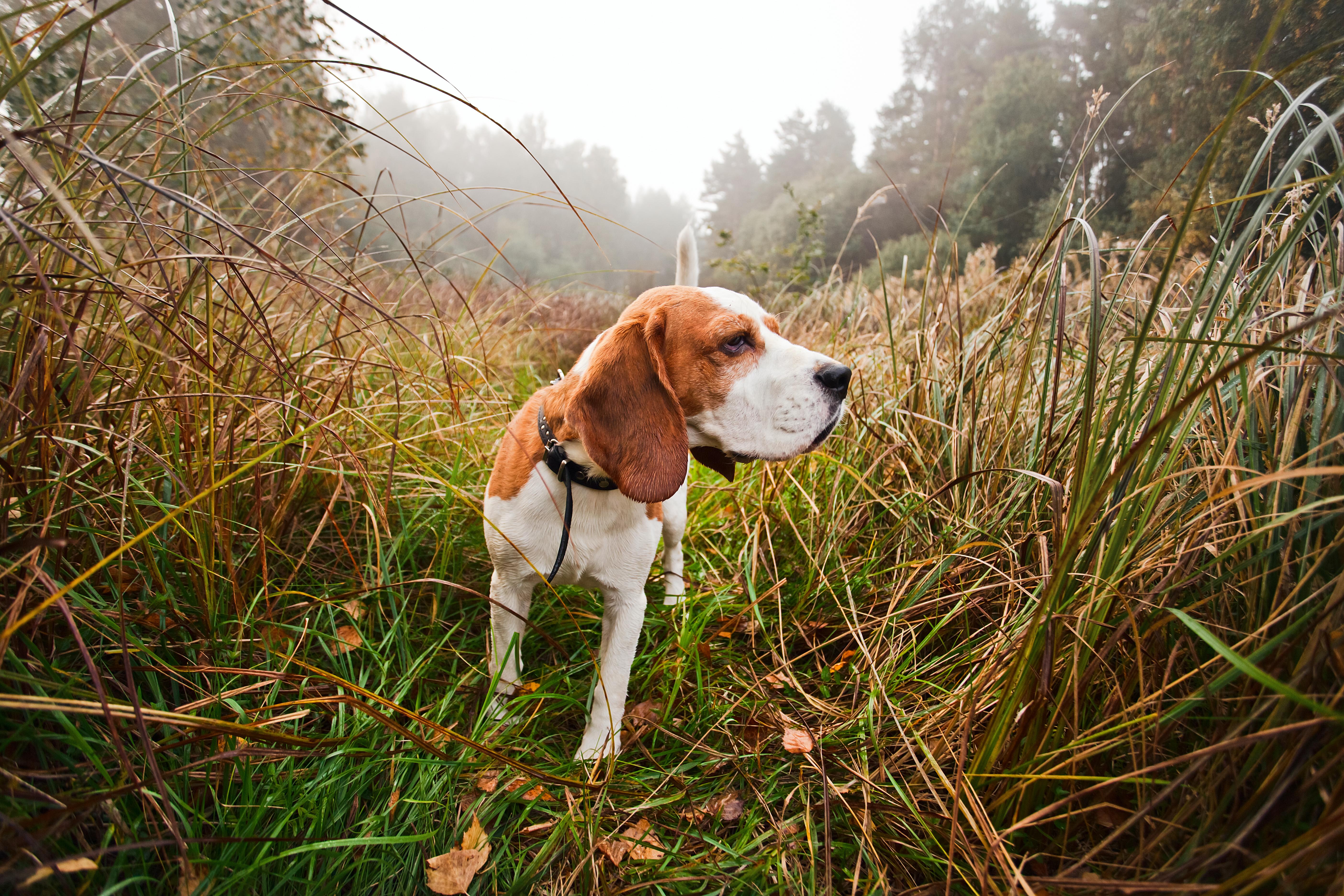 I skog och mark kan det vara både svårt för dig som hundägare att lokalisera hunden men också för hunden att hitta tillbaka.