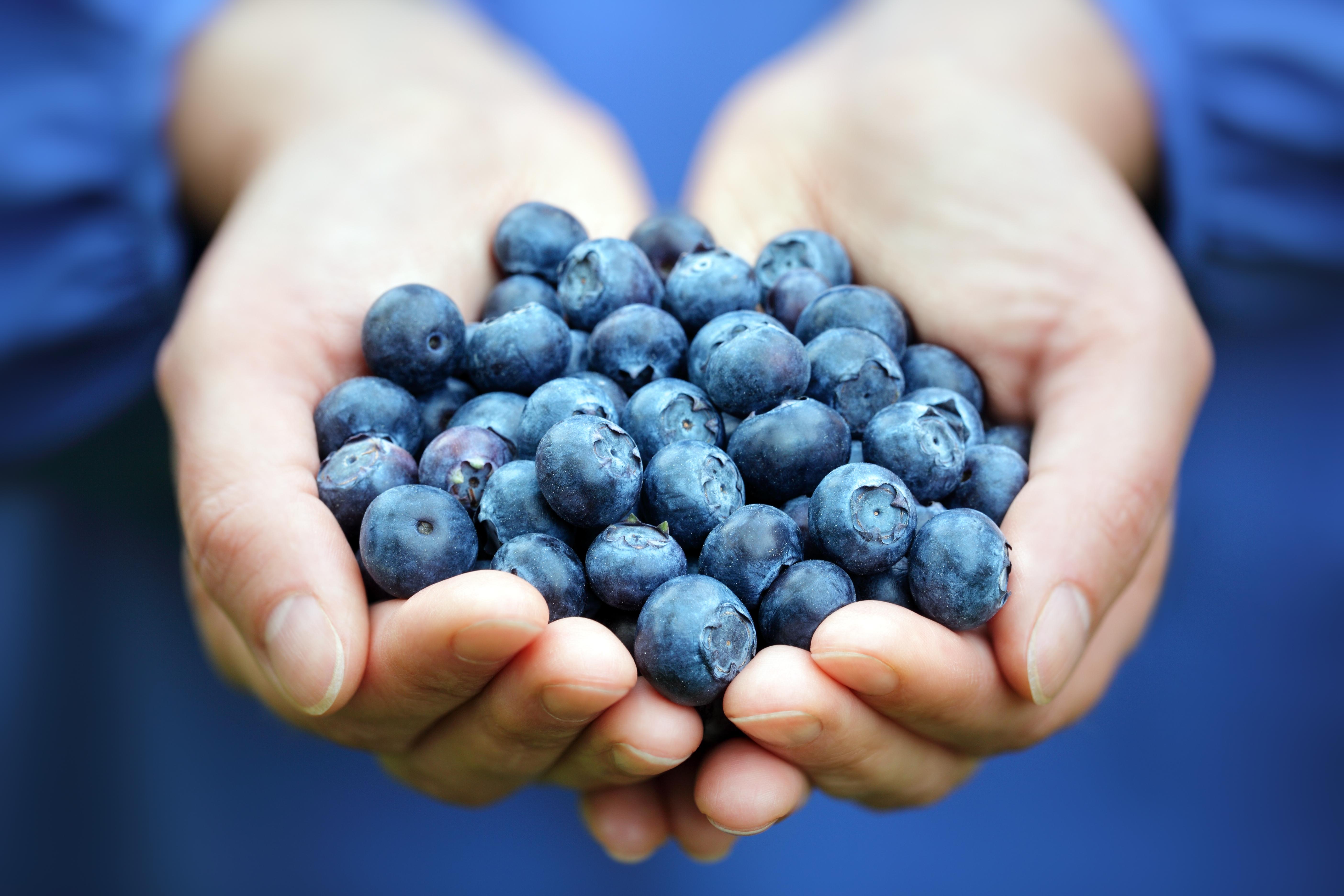 Den dagliga dosen av blåbär som deltagarna fick motsvarar nästan ett halvt kilo färska blåbär om dagen.