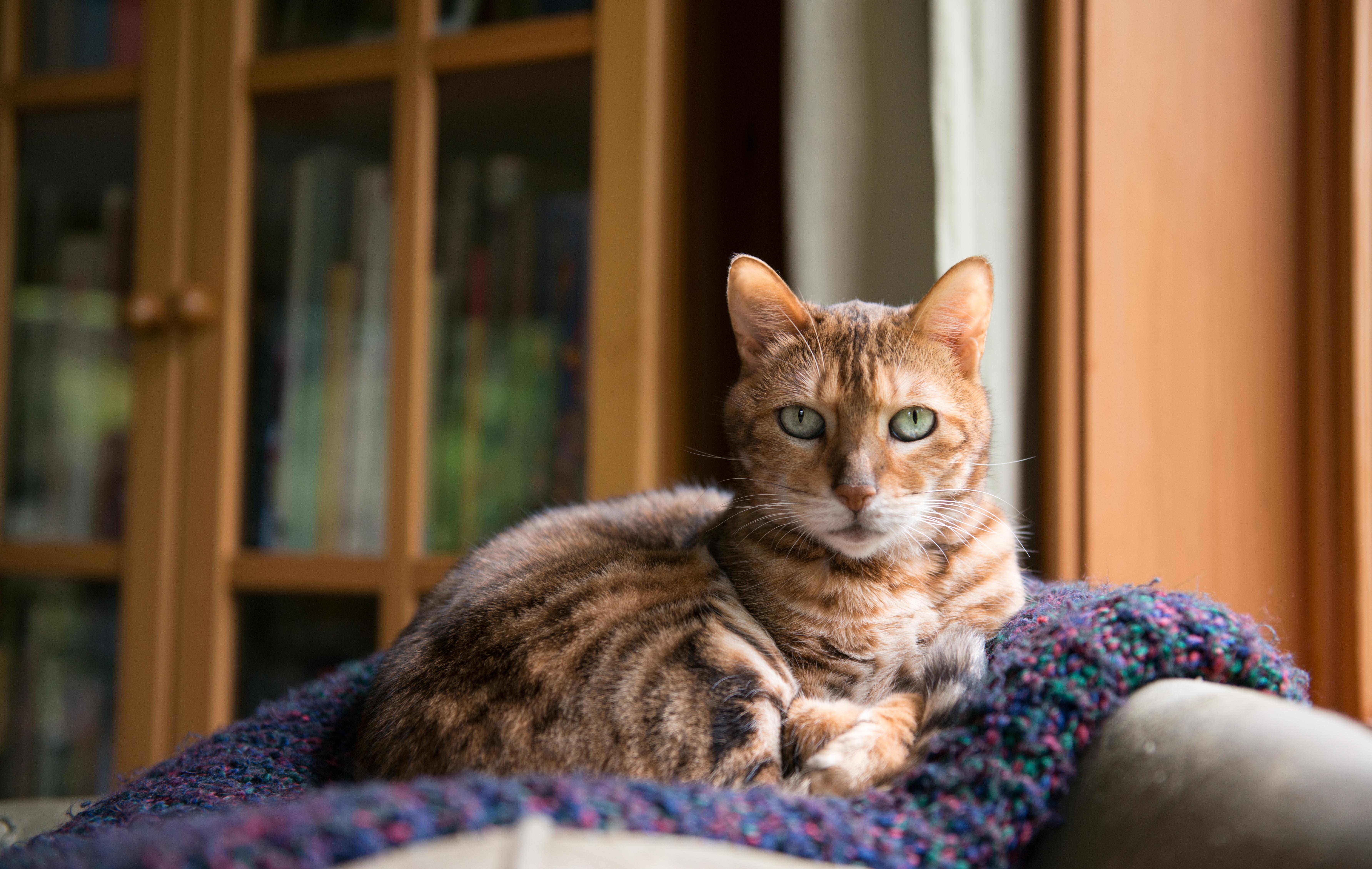 Katter är inte gjorda för ett stillasittande liv och fetma kan innebära betydligt försämrad livskvalitet för katten.