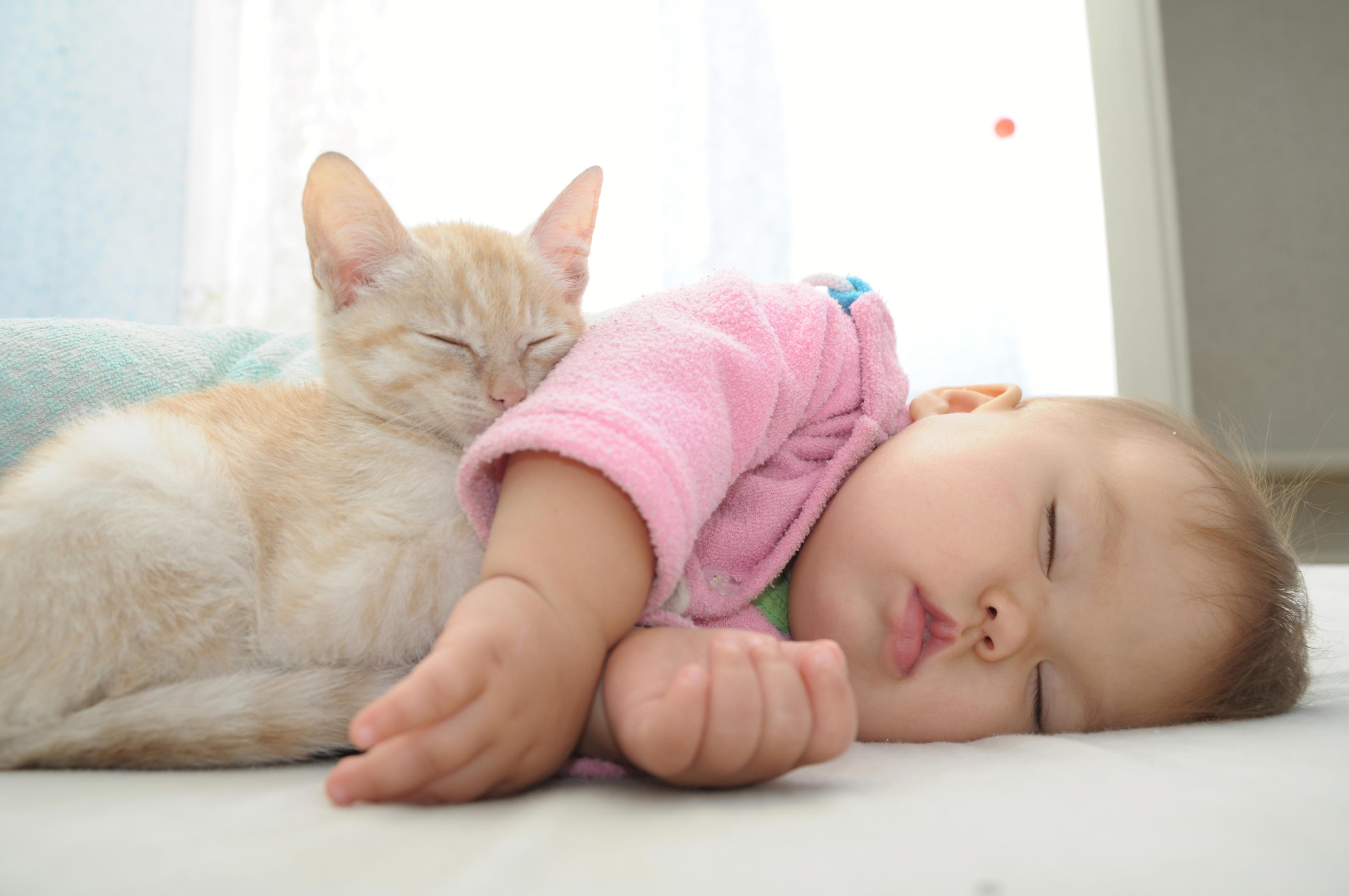 För såväl människor som däggdjur är en god REM-sömn när man är liten viktigt för hjärnans utveckling.
