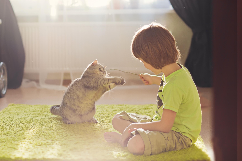 Särskilt inomhuskatter behöver fysisk stimulans genom att du aktiverar katten. På så vis förebygger du fetma hos katten.