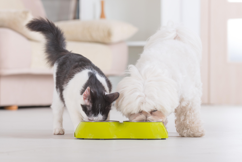 """Med projektet """"Låt dem leva livet lättare"""" hoppas man kunna motverka trenden med övervikt hos Sveriges hundar och katter."""