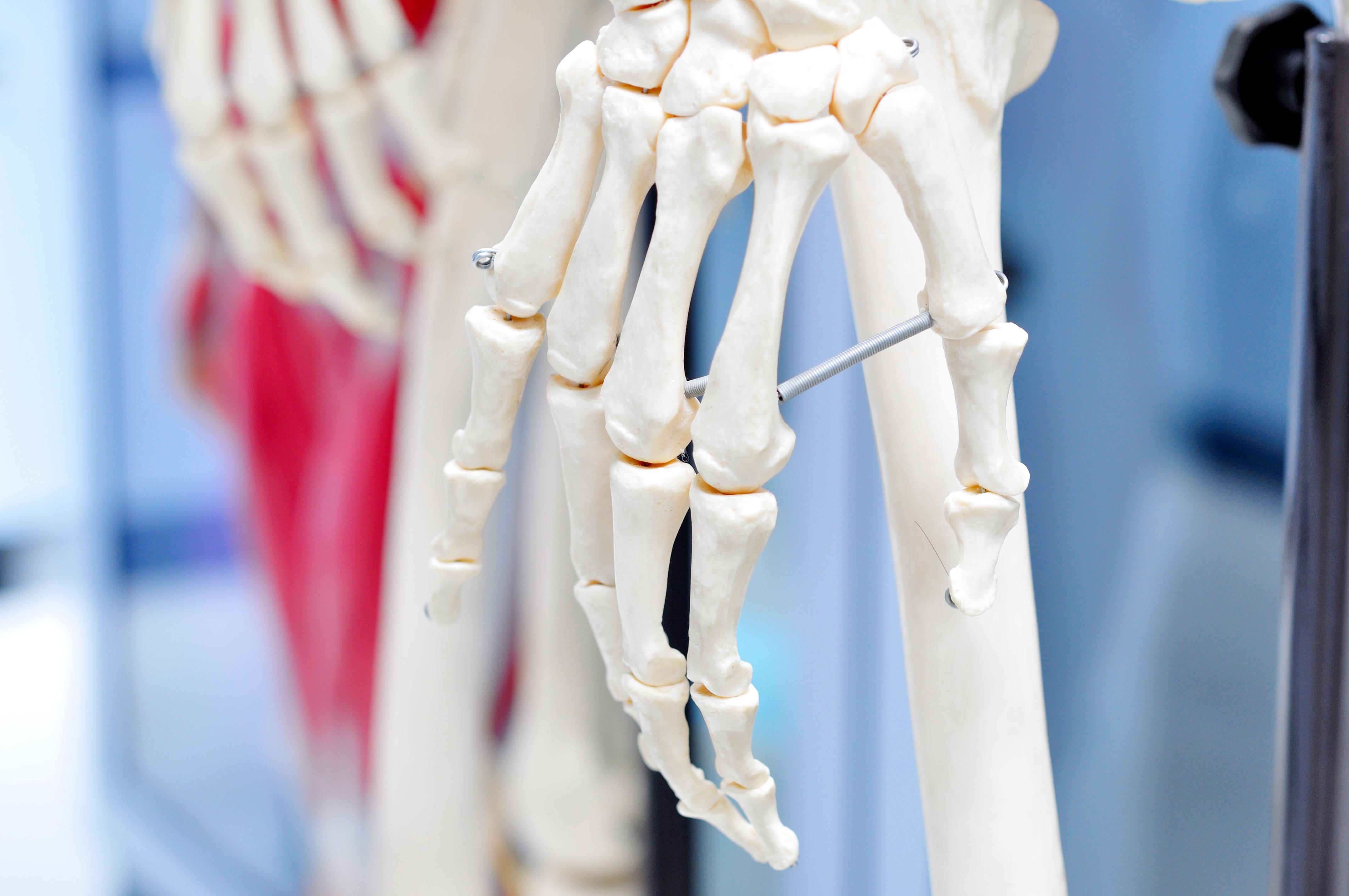 Nästan allt kalcium i kroppen lagras i ben.