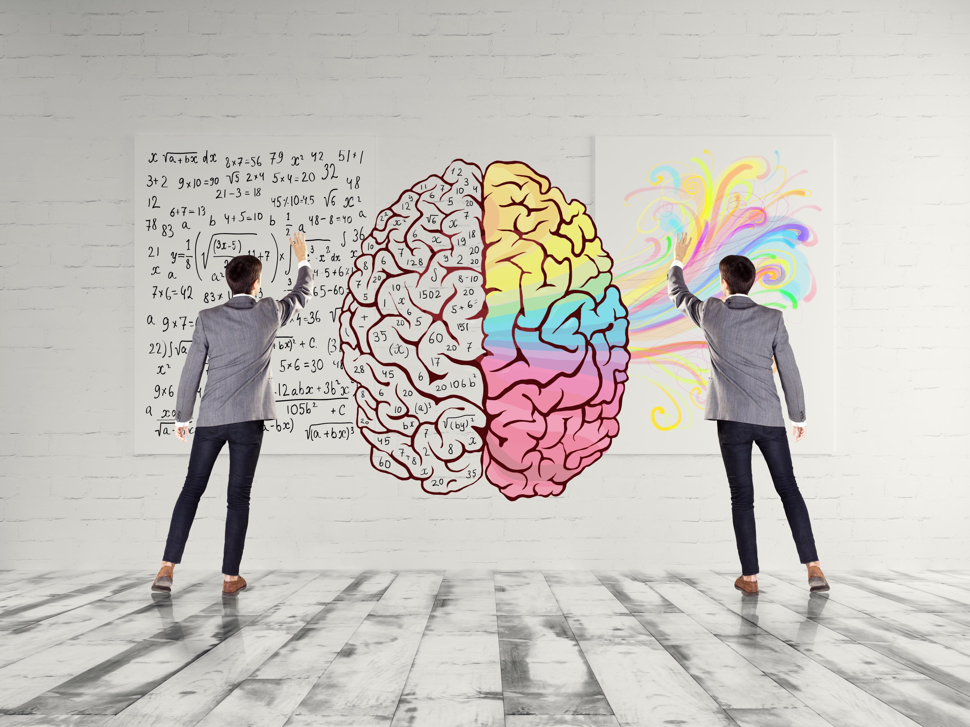 Den vänstra hjärnhalvan står för analytiska förmågor medan den högra hjärnhalvan ansvarar för konstärlig förmåga och synförmåga.