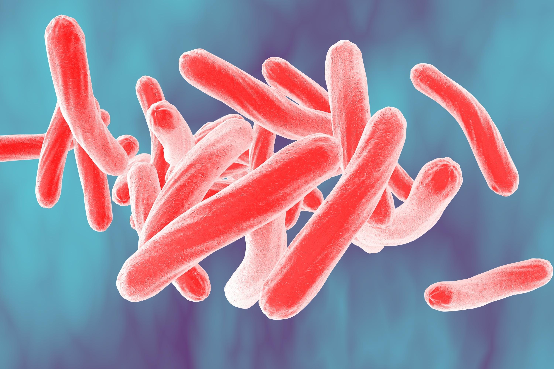 Tbc smittar via bakterier, bakterier som man kan bära på en lång tid innan själva sjukdomen bryter ut.