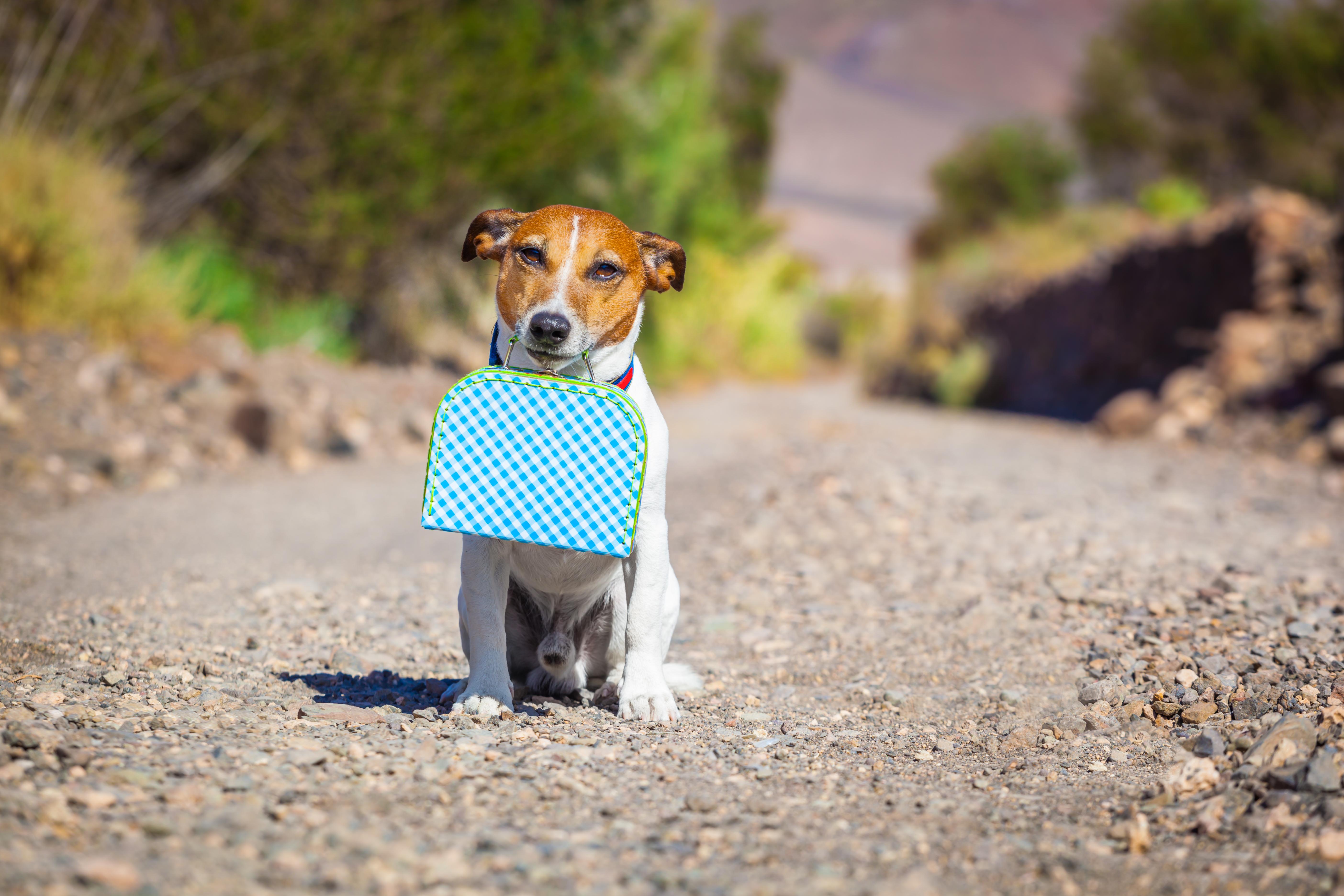 Att ta hunden eller katten på resan är ett angeläget ämne för många svenskar då det beräknas finnas cirka 784 000 hundar respektive 1 159 katter i landet.