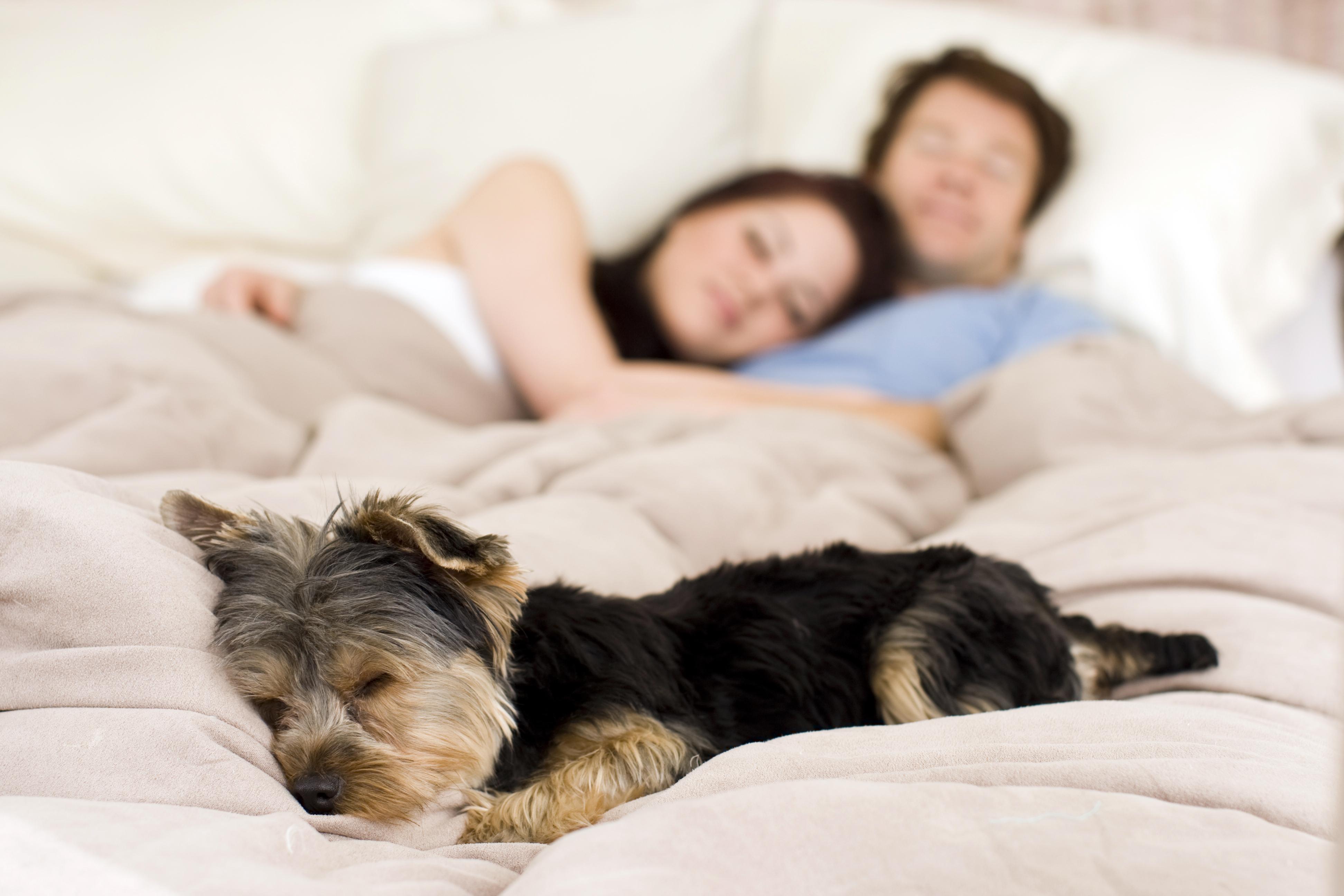 Hundägarna i studien sov bättre och besökte läkare mer sällan.
