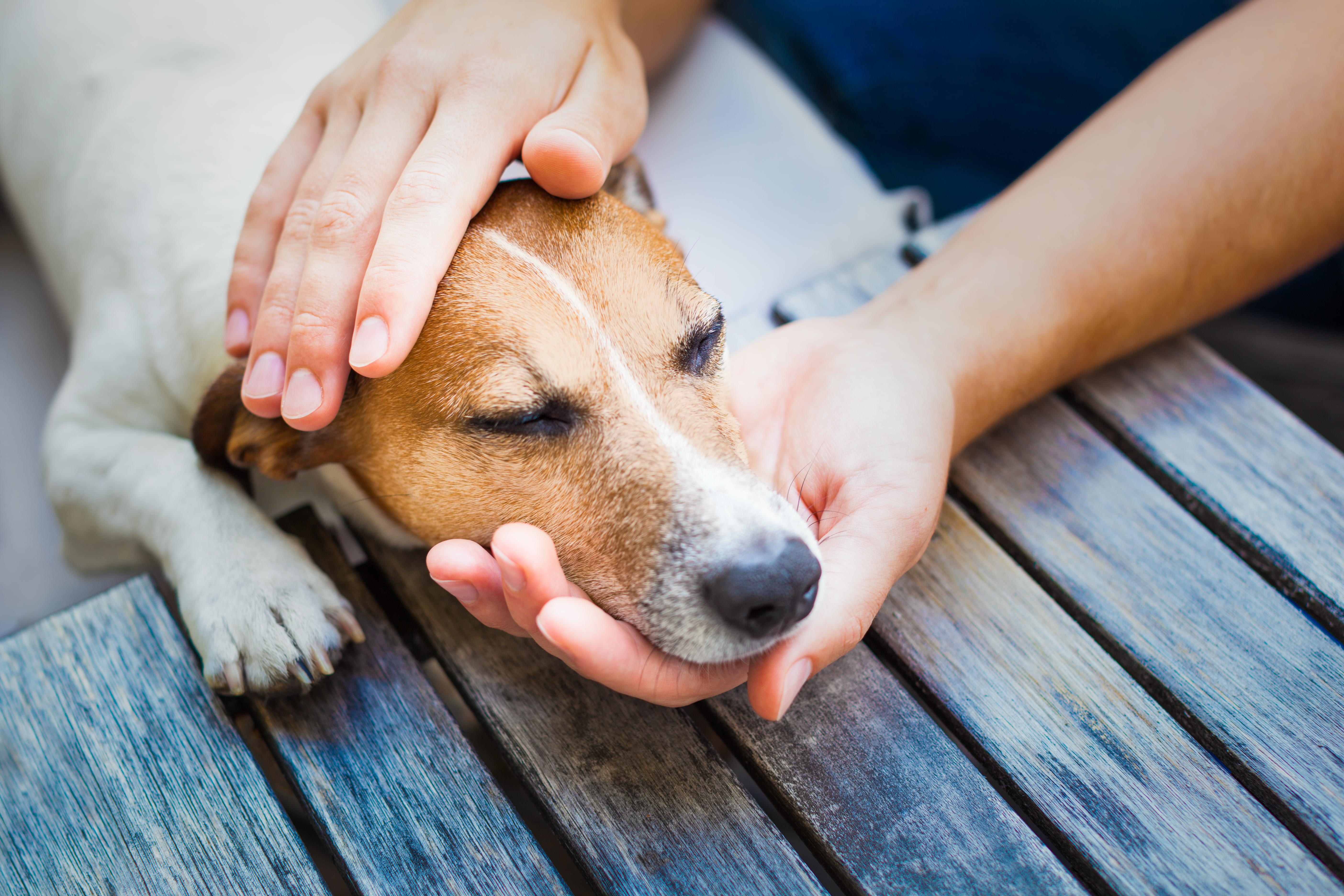 Kräkningar hos hund går ofta över av sig själv.