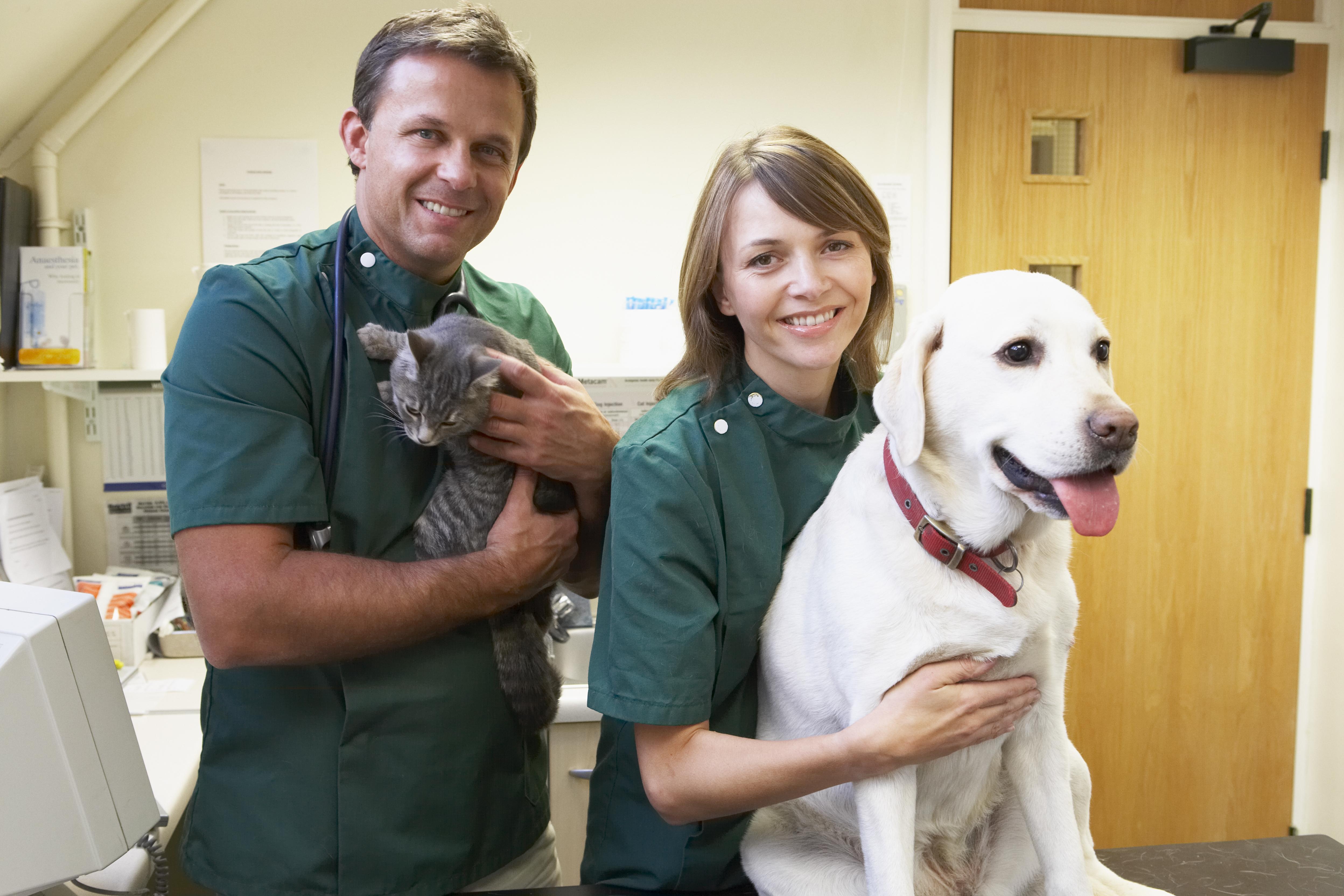 Både hundar och katter kan lämna blod 3-4 gånger per år och de brukar kompenseras med exempelvis gratis hälsoundersökning, vaccinationer eller liknande.