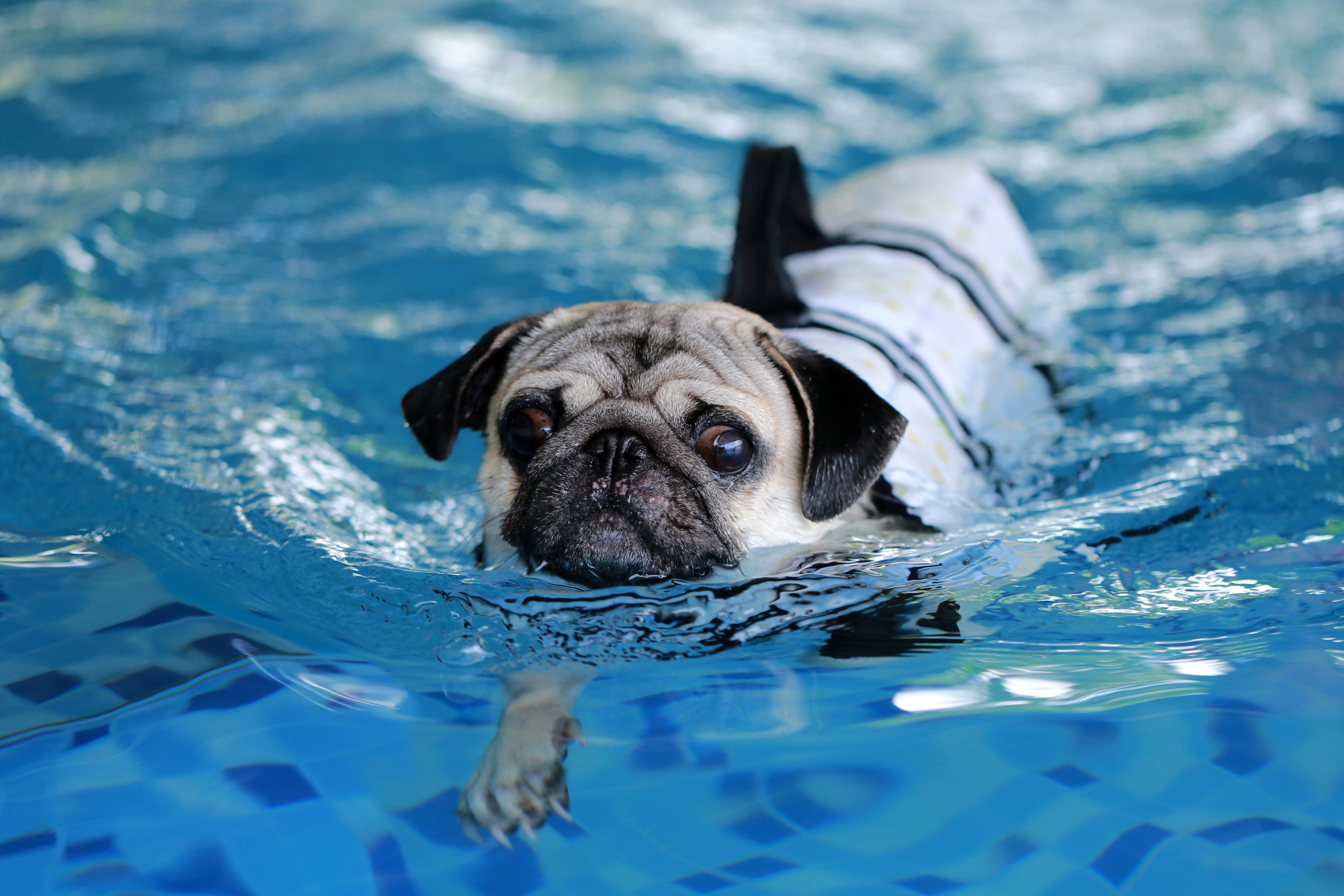 De flesta hundarna som kommer in behandlas för ledproblem och då är vattengymnastik en skonsam träningsform.