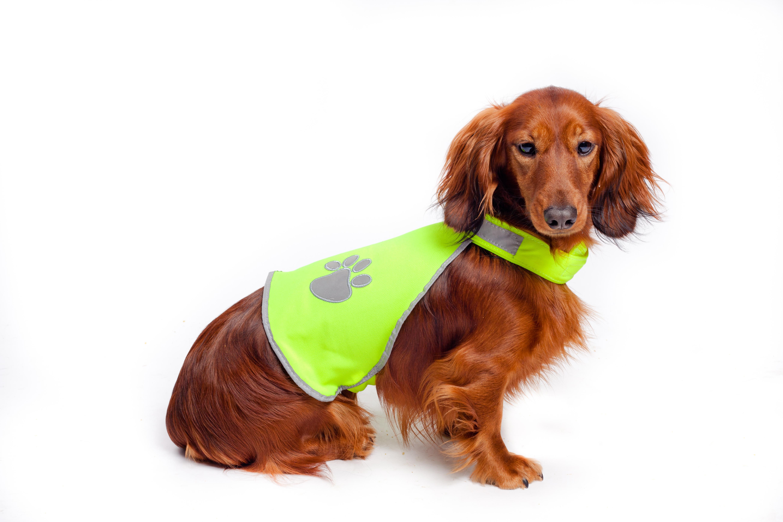 På hundar med rejäl päls passar det bättre med en reflexväst.