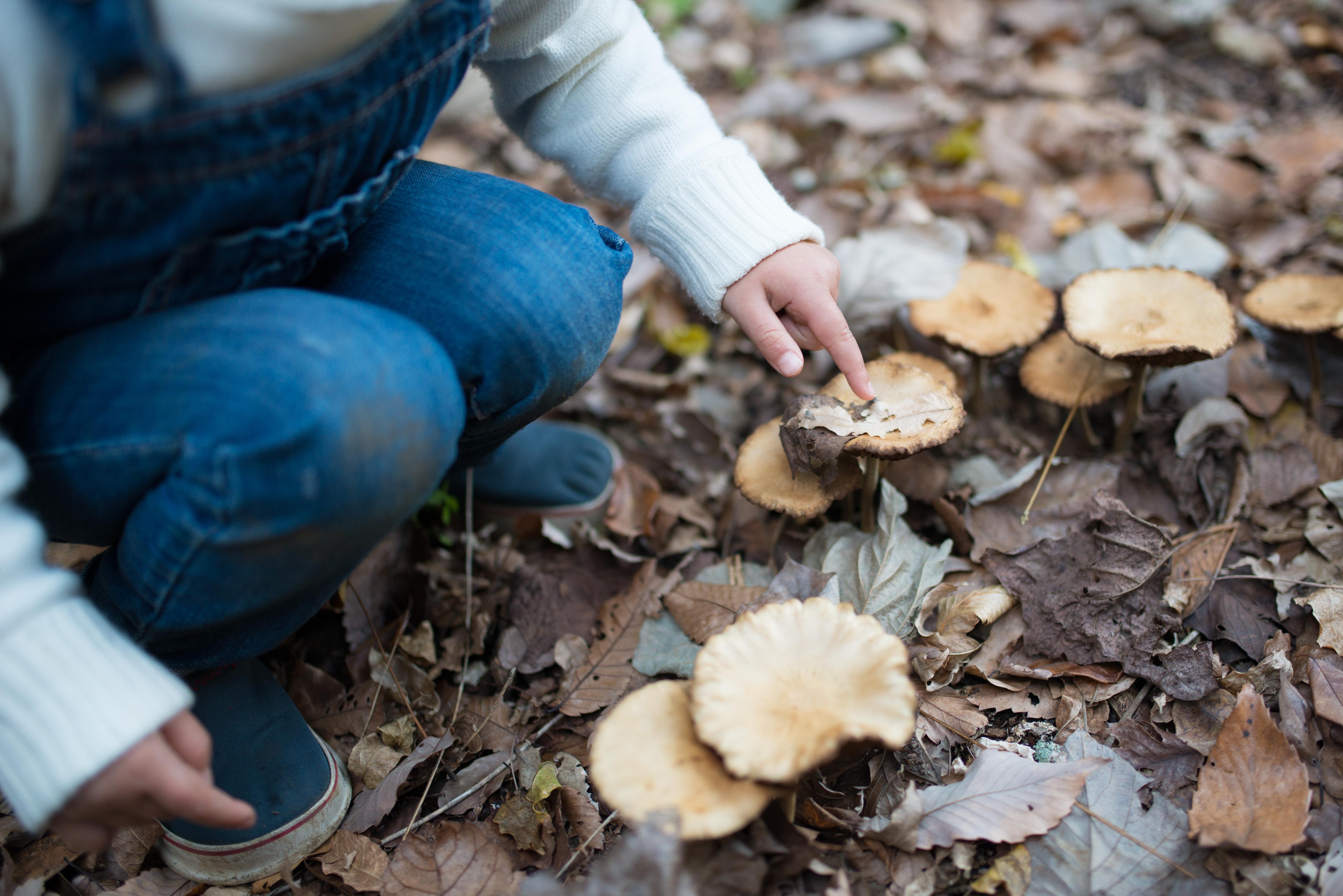 Barn är nyfikna till sin natur och det förekommer att de smakar på svampar som växer i skog och mark.