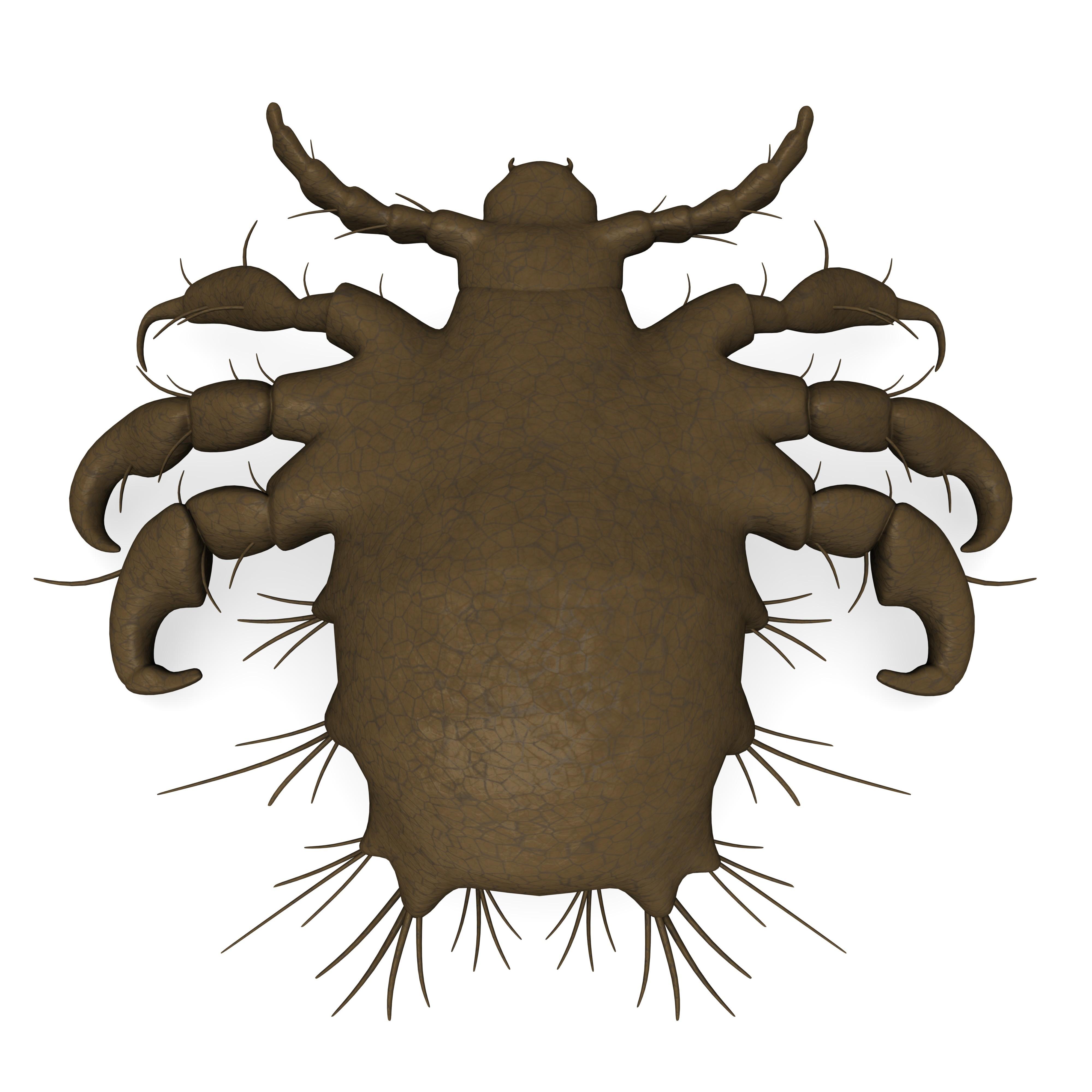 Flatlöss är hudparasiter som suger blod och lever i könshår eller ögonbrynshår.