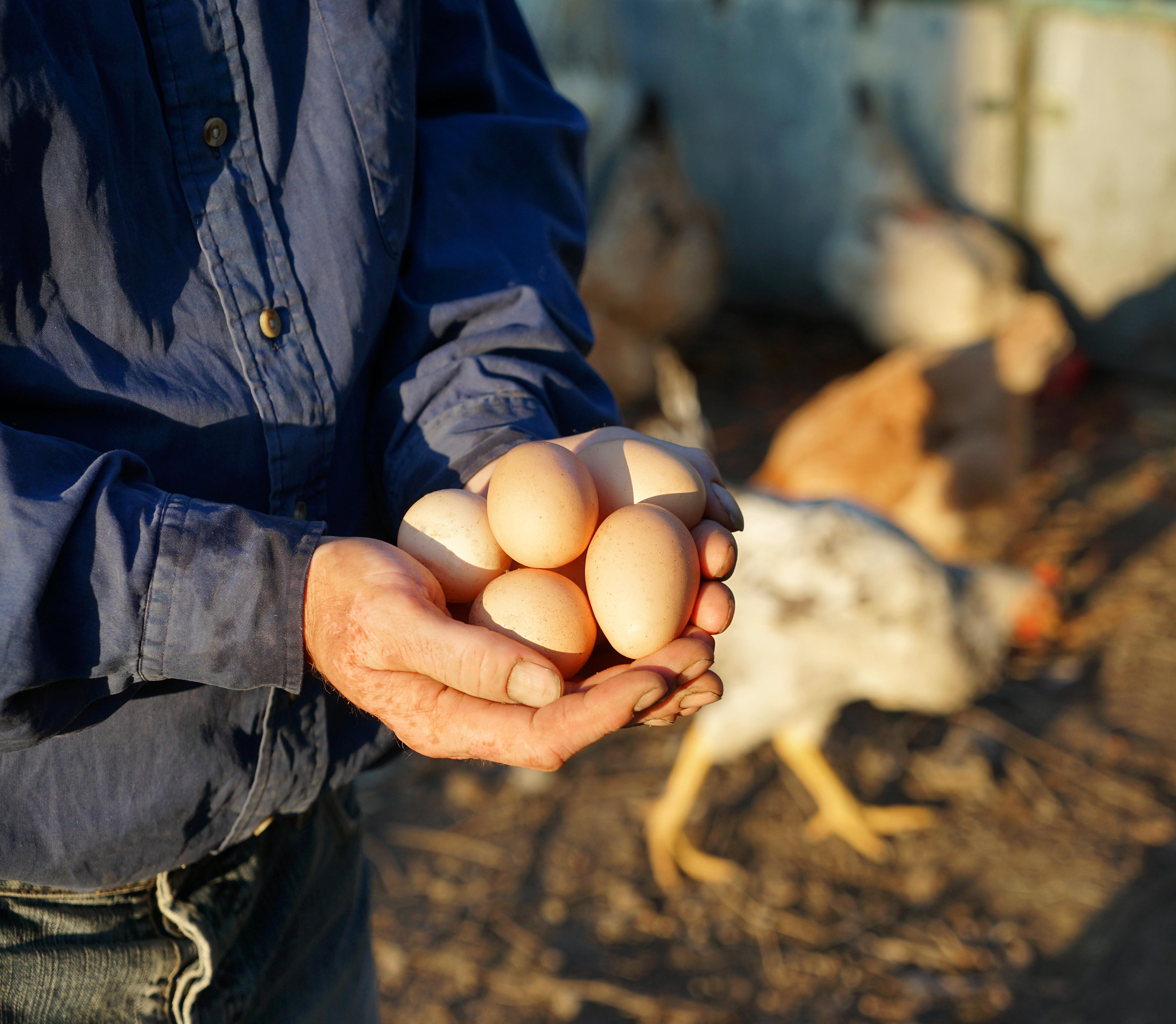Bara under påskveckan köper vi över 3 000 ton ägg vilket motsvarar cirka 50 miljoner ägg.