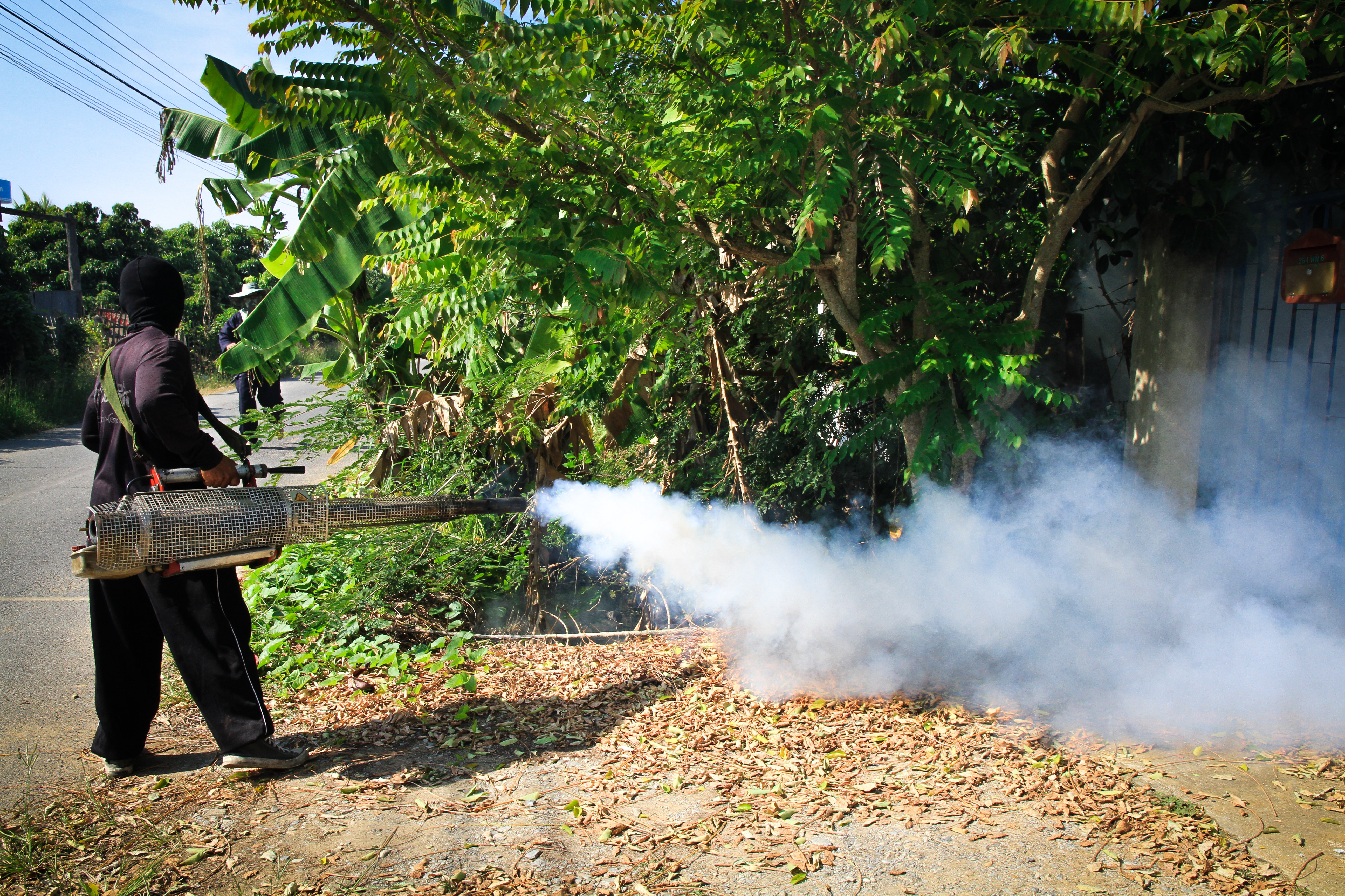 I de drabbade länderna kämpar nu myndigheter med att få bukt på smittan genom att bland annat utrota den mygga som sprider zikaviruset.