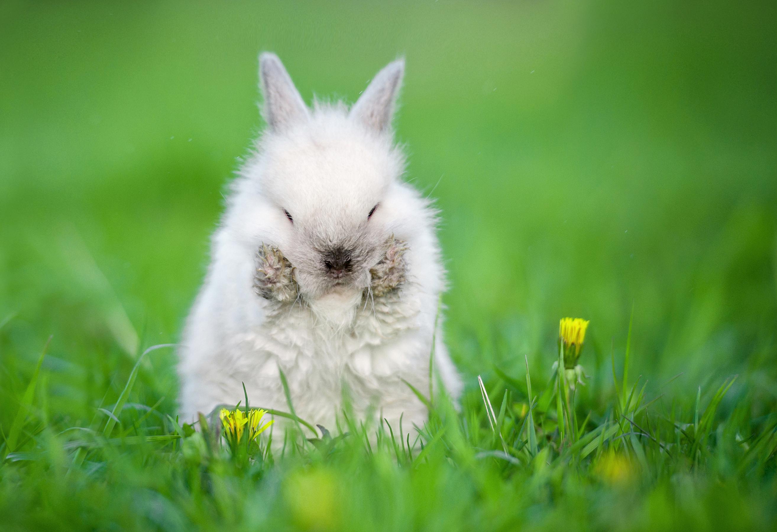 Vaccinet mot kaningulsot tar tio dagar att verka vilket är viktigt att du som ägare har i åtanke. Prata med din veterinär om vaccinering av din kanin.