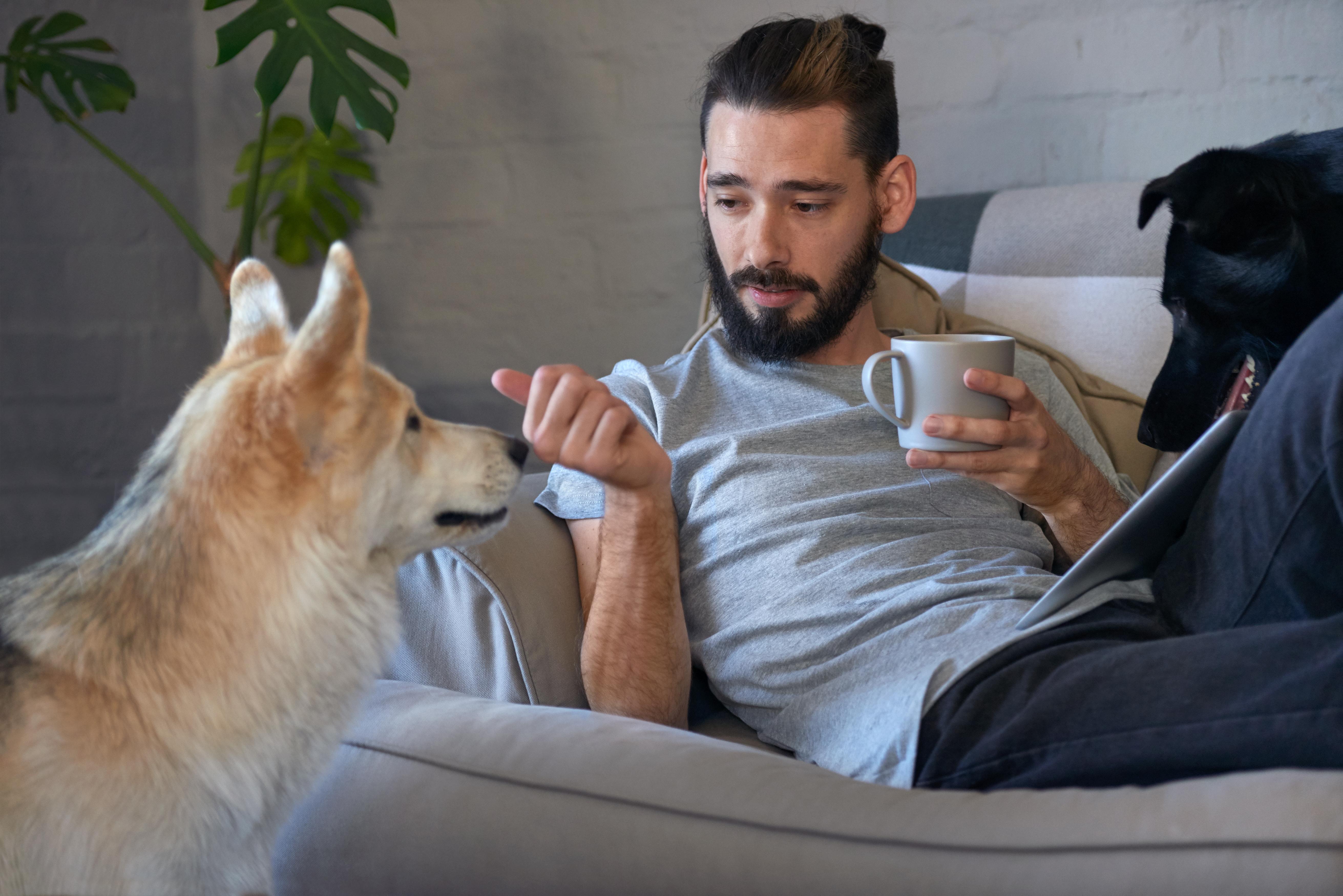 Studien visar att det finns ett specifikt område i hundens hjärna som är dedikerat till att förstå oss människor.