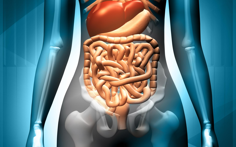 Tarmvred kan orsakas av att något fastnat i tarmen, och kan ge upphov till kräkningar och uppblåst mage.