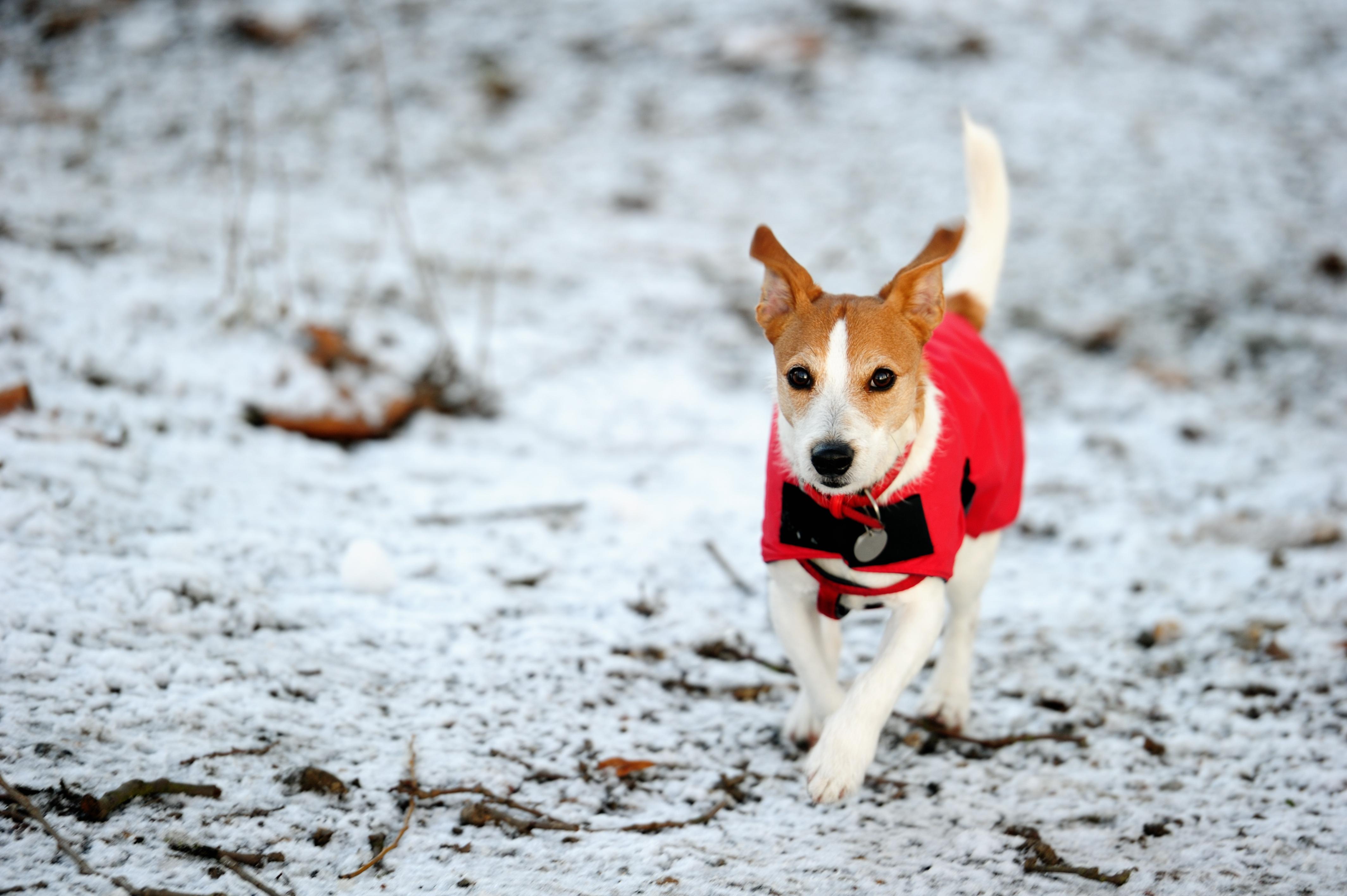 Under höst, vår och vinter när vädret skiftar, det blir kallt och blött så kan särskilt raser med kortare och mindre päls behöva ett skydd mot väder och vind.