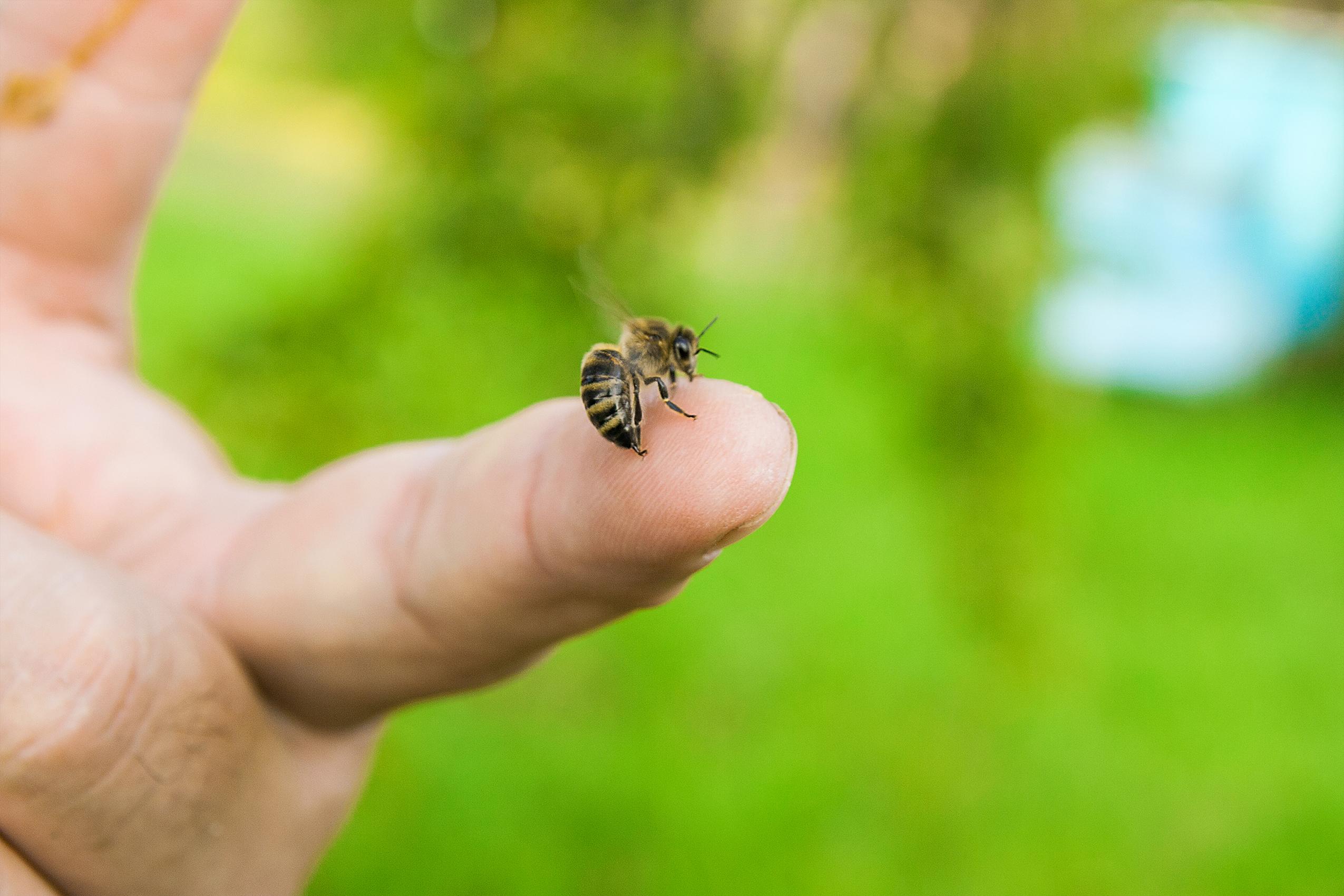 Det är inte alltid helt lätt att förebygga insektsbett men det går åtminstone att göra några åtgärder. Du kan till exempel vara försiktig när du befinner dig nära ett bi- eller getingbo.