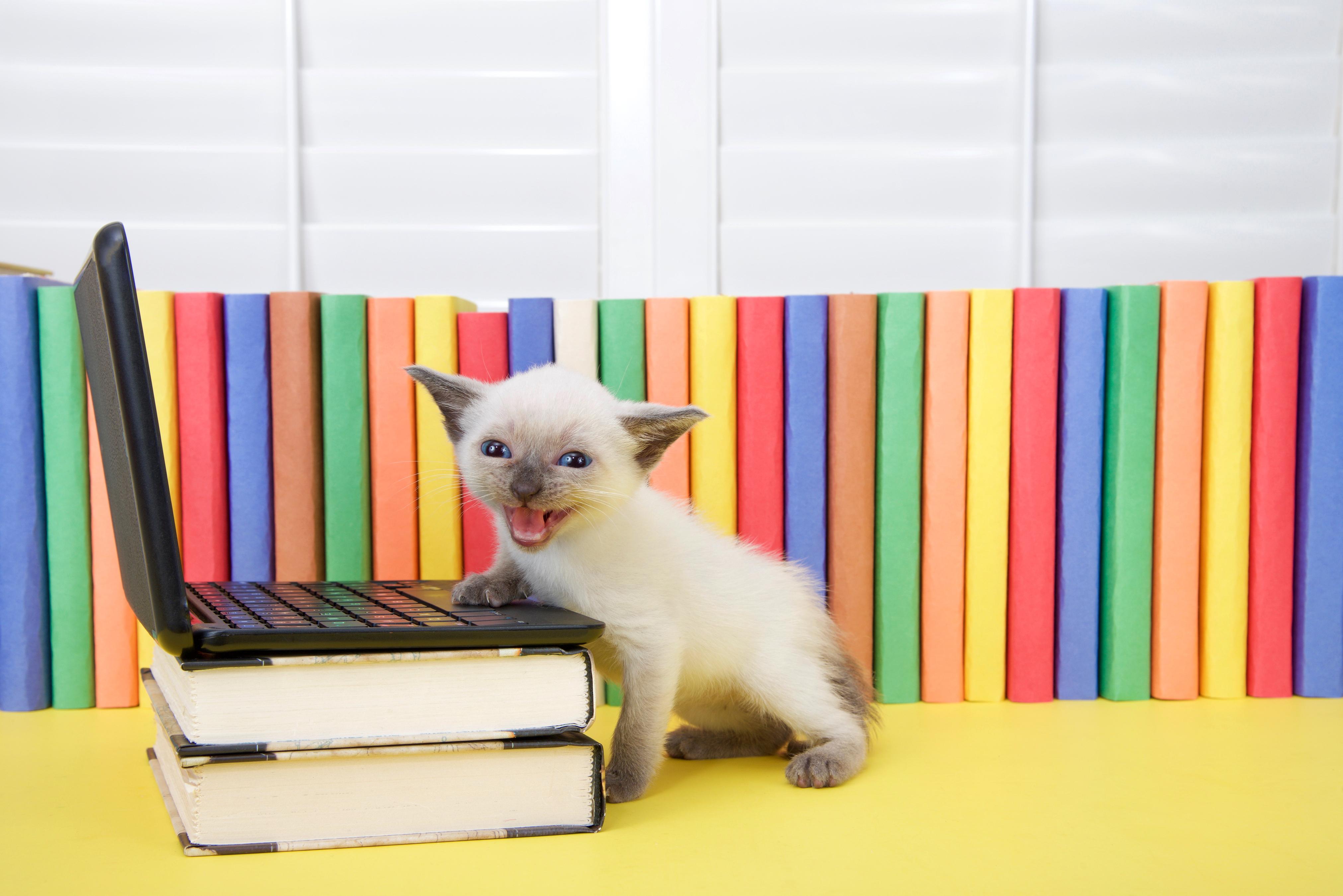 I projektet kommer forskarna att studera omkring trettio katter och deras ägare från olika delar av landet.