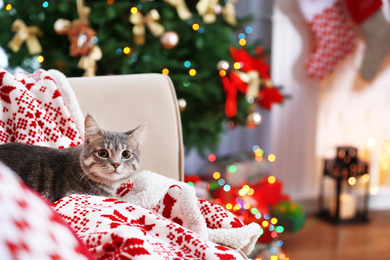 Många katter uppskattar lugn och ro och därför kan julen, när det är många människor i omlopp i hemmet, bli en stressig tidpunkt.