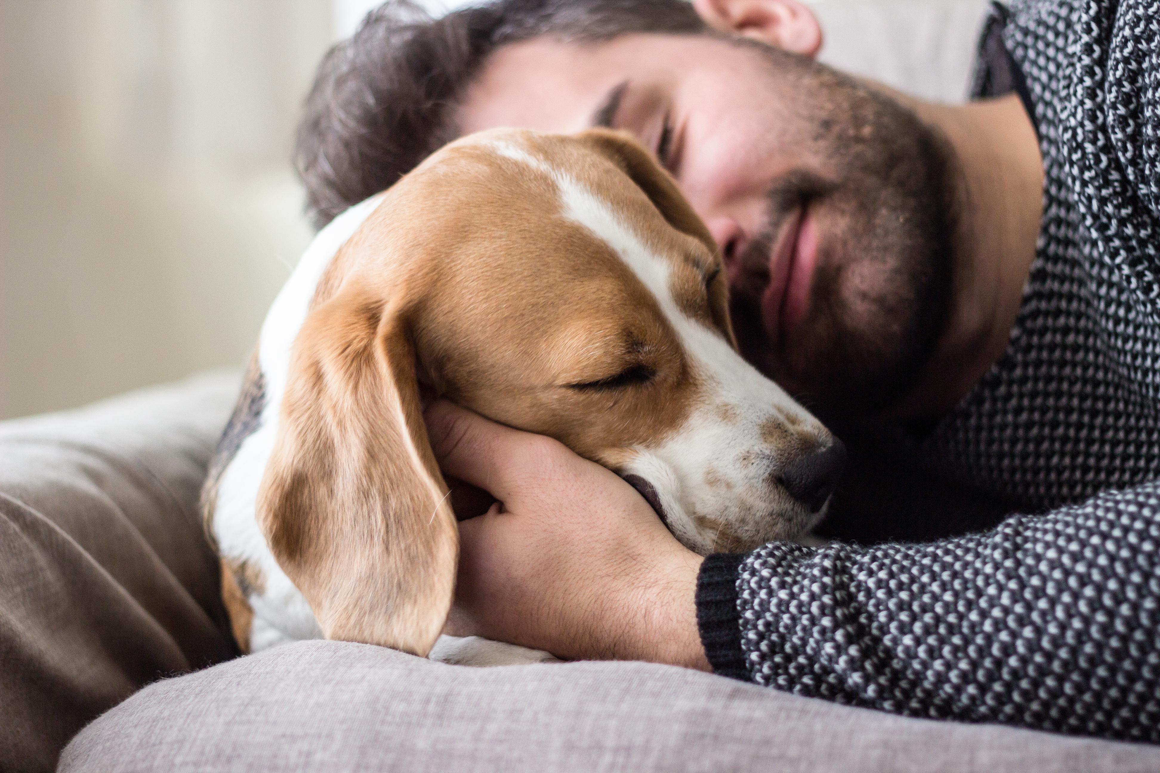 Några uppgifter om smitta från människa till husdjur finns idag inte beskrivna för covid-19.