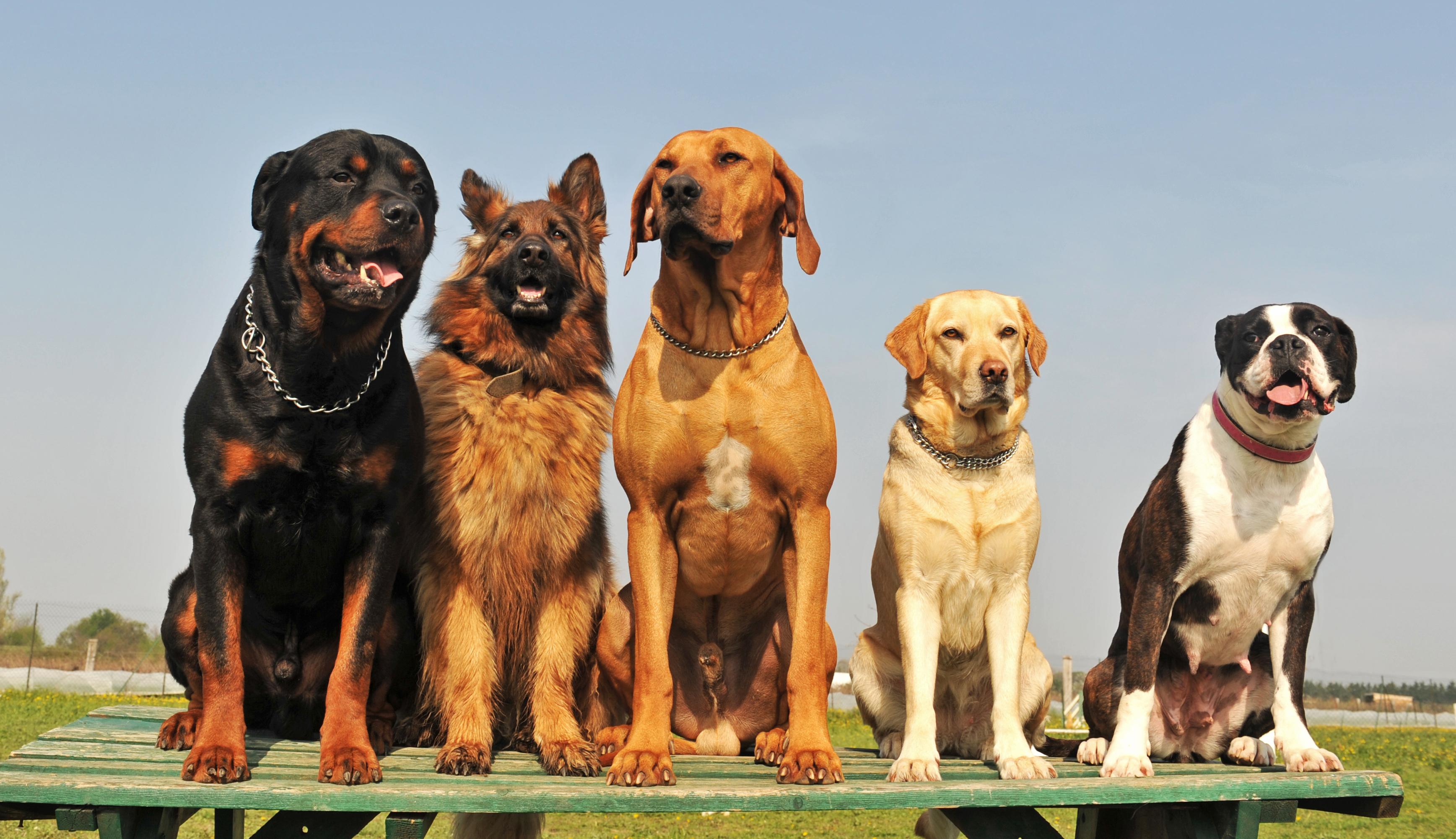 Artros hos hundar är delvis ärftligt.